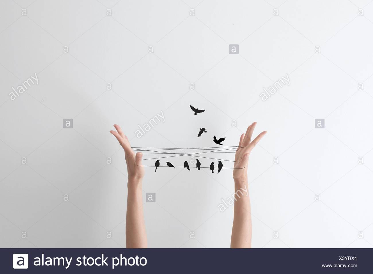 Juego de mano de cadena con aves, encaramado en la cadena Imagen De Stock
