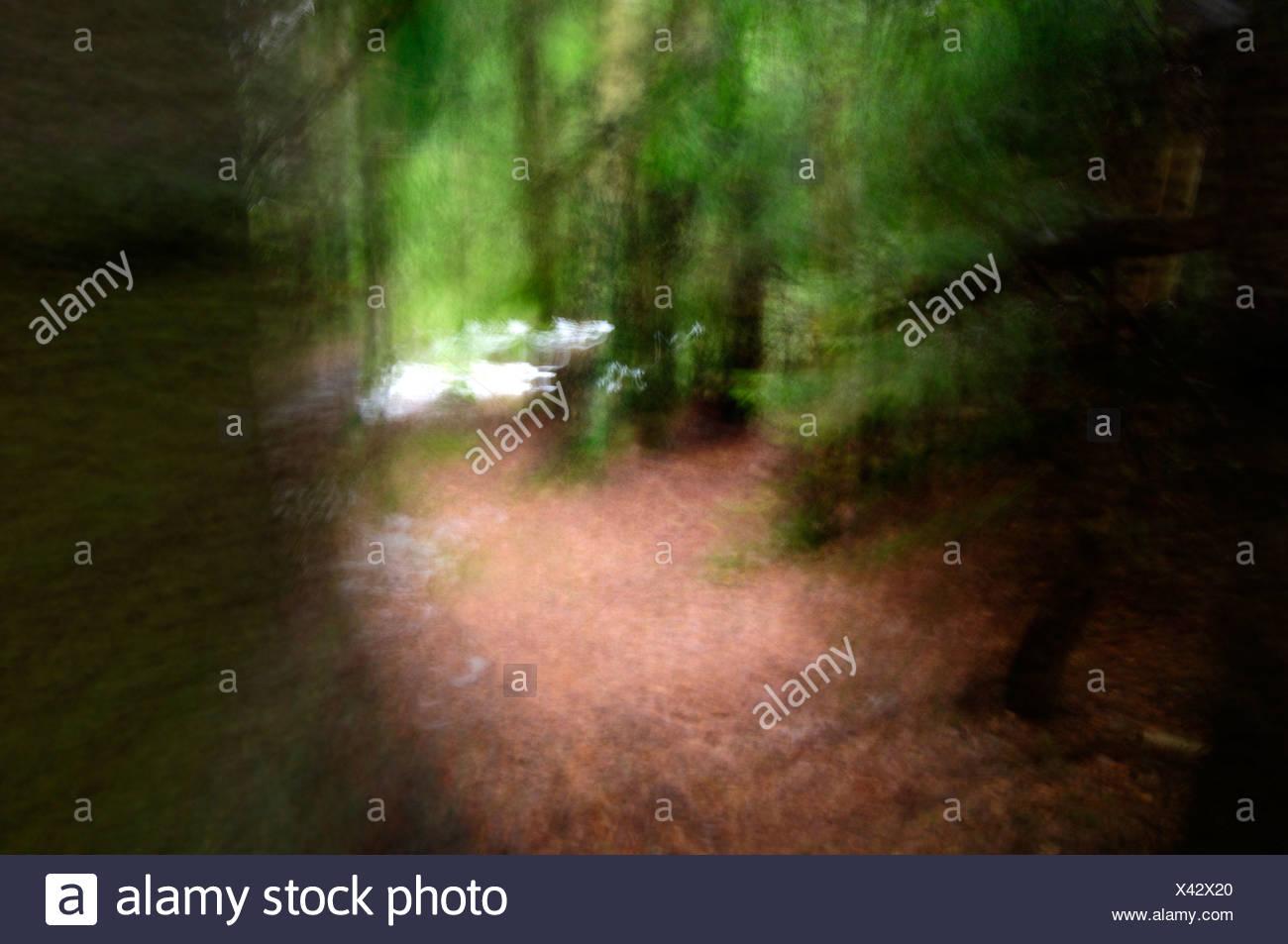 Escandinavia, Suecia, Vastergotland, vista del bosque Foto de stock