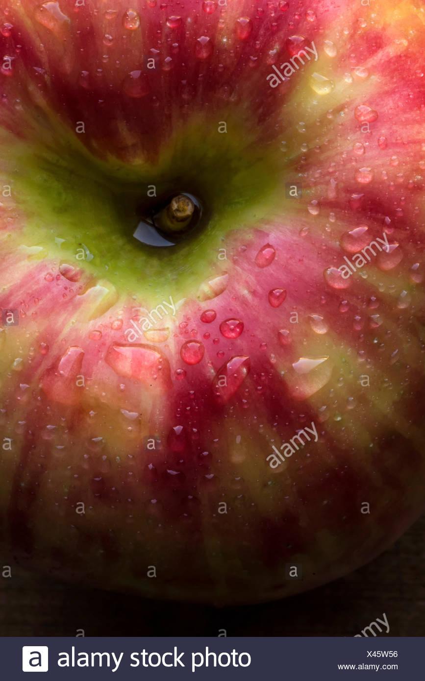 Detalle, macro foto de una manzana honeycrisp con gotas de agua. Imagen De Stock