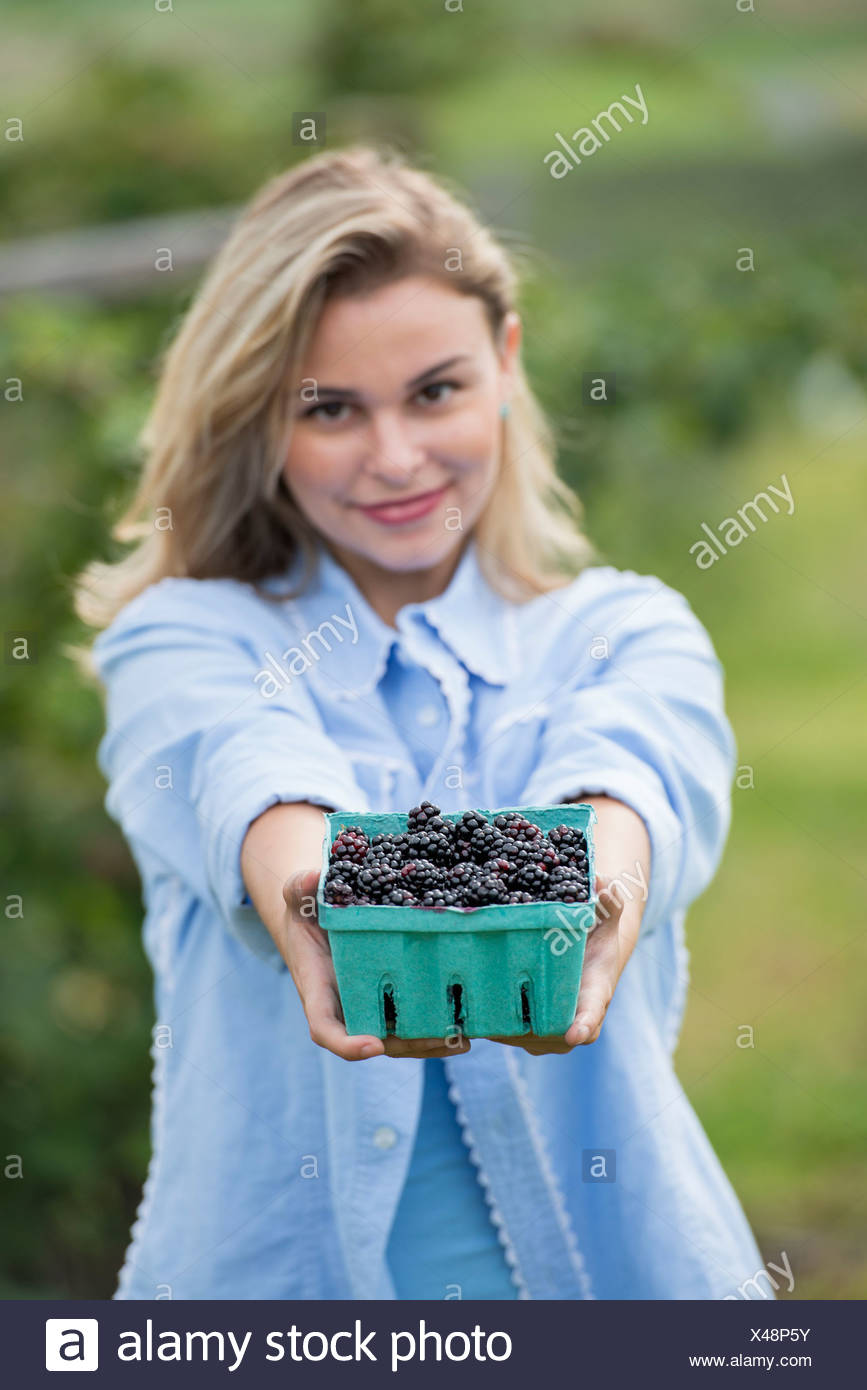 Blackberry recogiendo frutas en una granja orgánica. Una mujer que sostiene una plena punnett satinado de bayas. Imagen De Stock