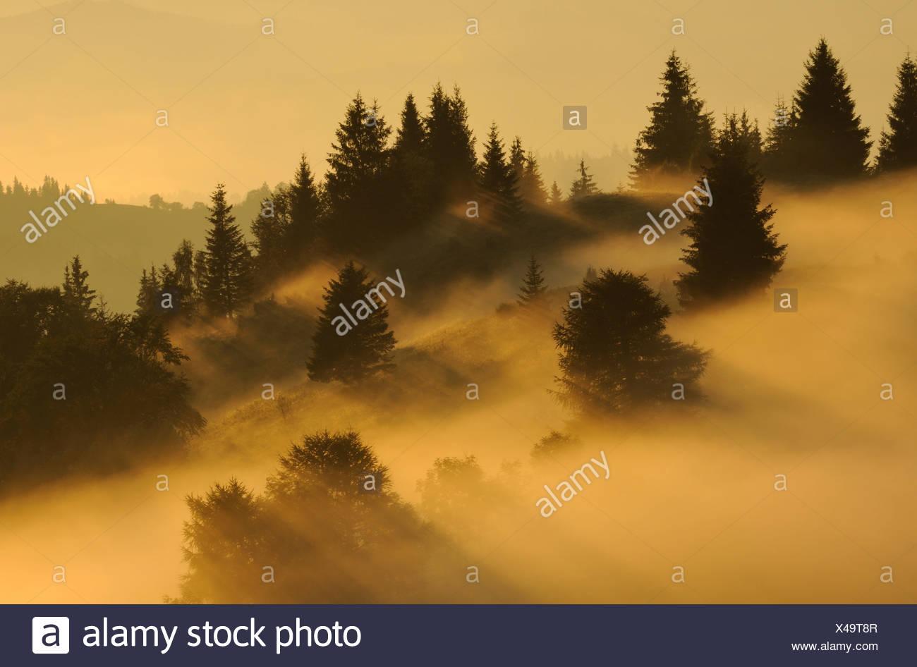 Paisaje en zona dzembronya en Ucrania al amanecer Imagen De Stock