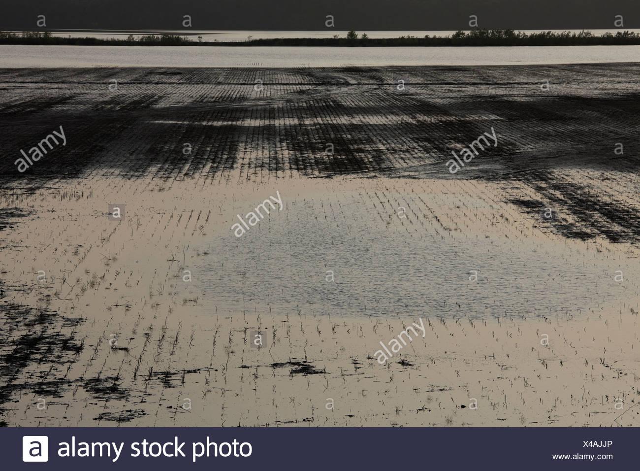 Inundación cerca de la granja de Finley, Tennessee Imagen De Stock
