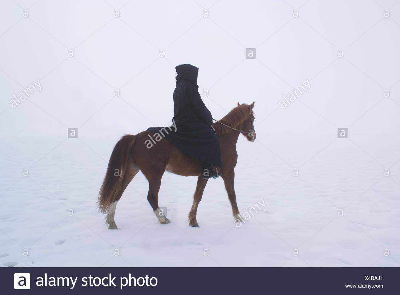 Mujer, caballo, invierno, niebla, rider, ecuestre, nieve, mujer, árbol, ride, caballo, Foto de stock