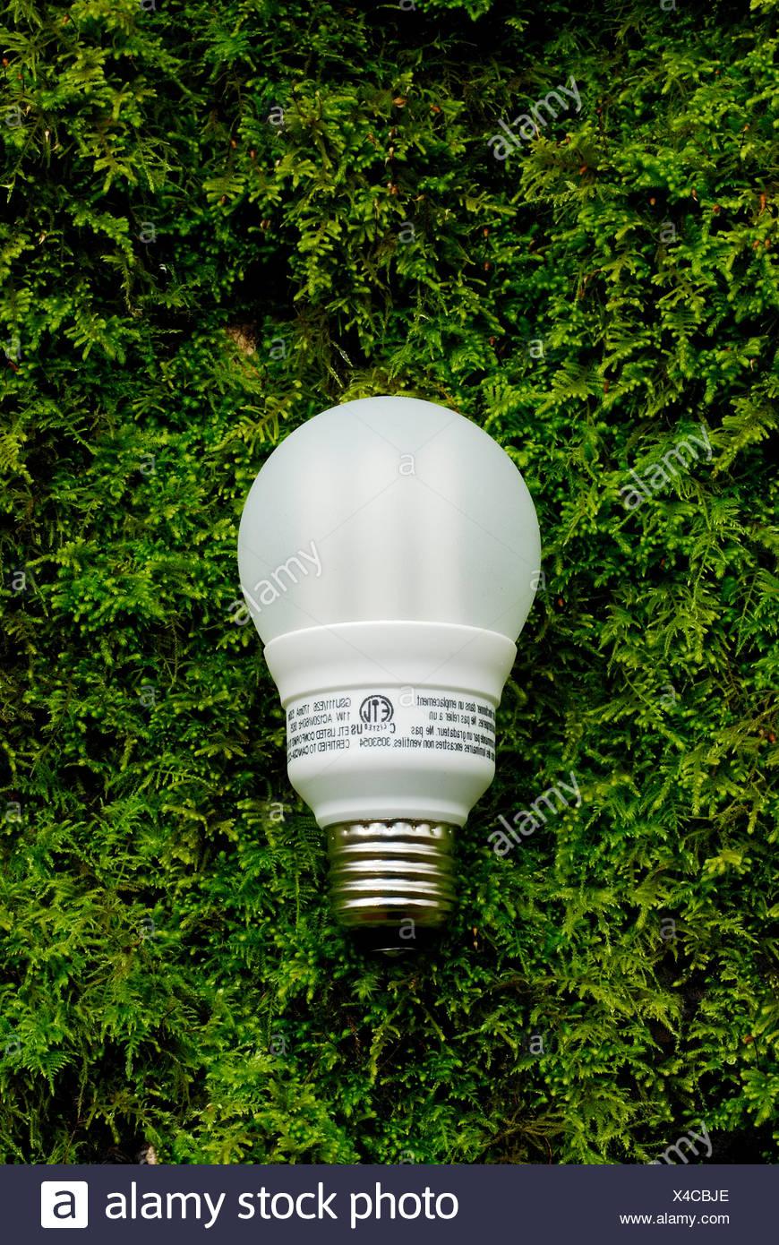 Bombilla de eficiencia energética. Imagen De Stock