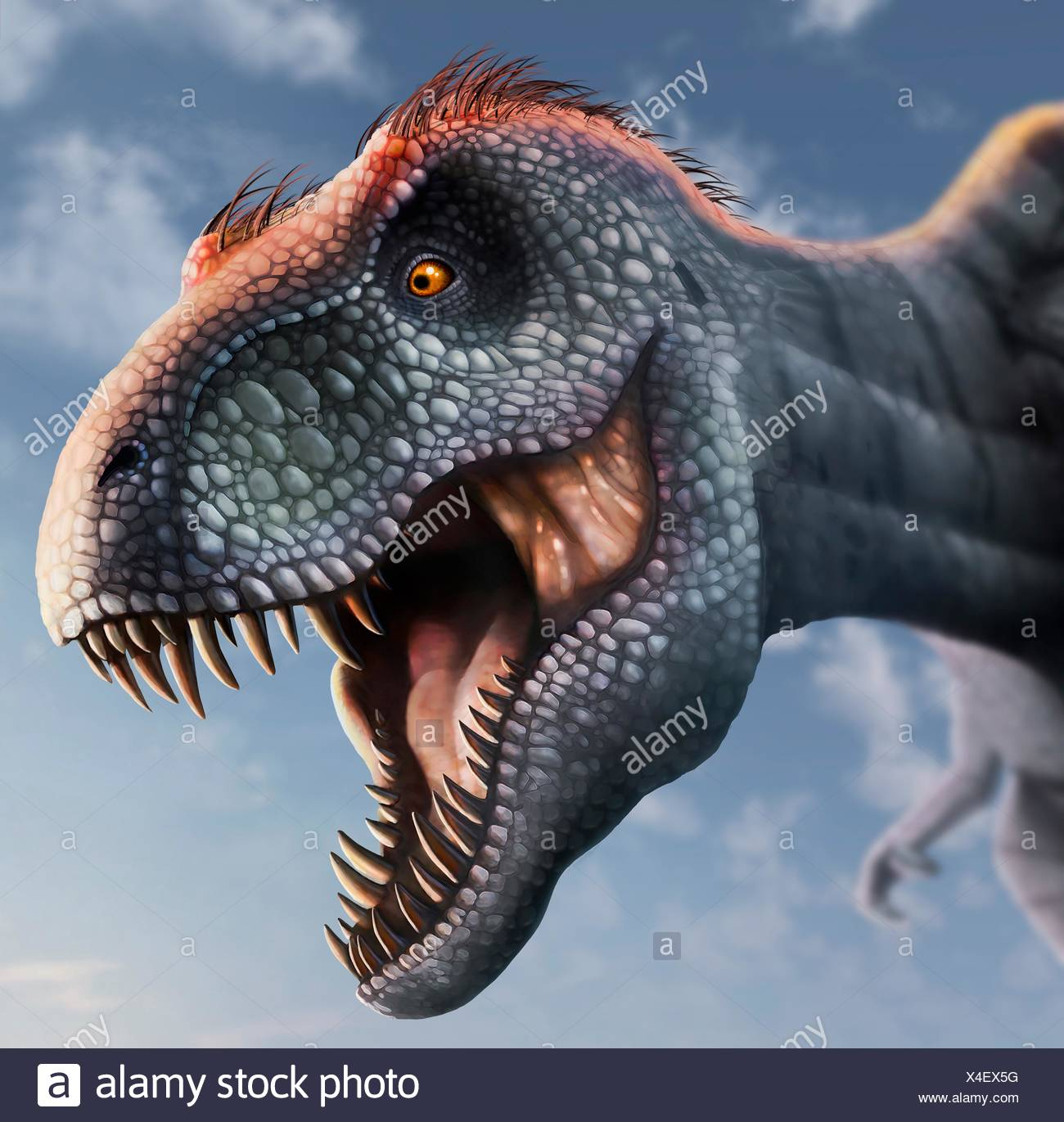 Tyrannosaurus Rex Cabeza Ilustracion Este Dinosaurio Vivia En America Del Norte Desde Hace 70 Millones De 5 dinosaurios captados en cámara y vistos en la vida real, en algunas ocaciones pensamos que algunas especies prehistóricas están existas como por ejemplo. https www alamy es tyrannosaurus rex cabeza ilustracion este dinosaurio vivia en america del norte desde hace 70 millones de anos hasta la extincion de los dinosaurios de unos 5 millones de anos mas tarde la cabeza esta fuertemente construida para soportar impactos con presas animales y tiene los dientes afilados de un depredador t rex se piensa para haber sido un scavenger asi como un cazador entre los mas grandes dinosaurios carnivoros t rex fue de hasta 6 metros de altura y pesa tanto como 7 toneladas el animal esta representado con plumas marrones aunque si se tenian en la vida real es especulativa image278152380 html