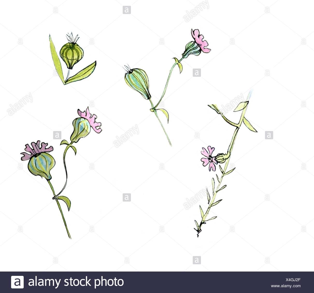 Flores De Color Rosa Dibujo En Rosa Y Verde Foto Imagen De Stock