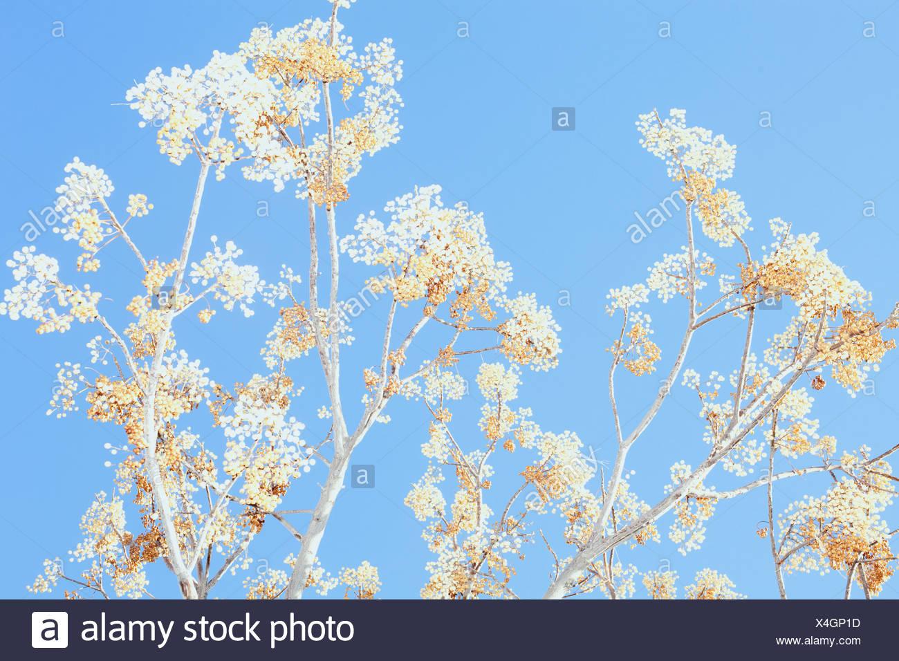 Planta contra el azul claro del cielo Imagen De Stock
