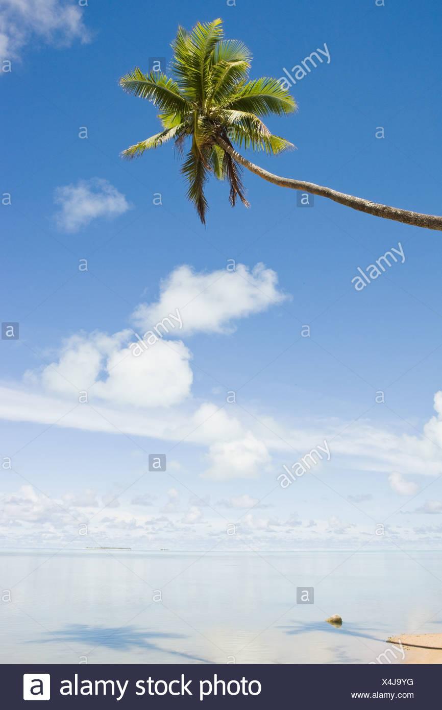 Playa y única palmera Imagen De Stock
