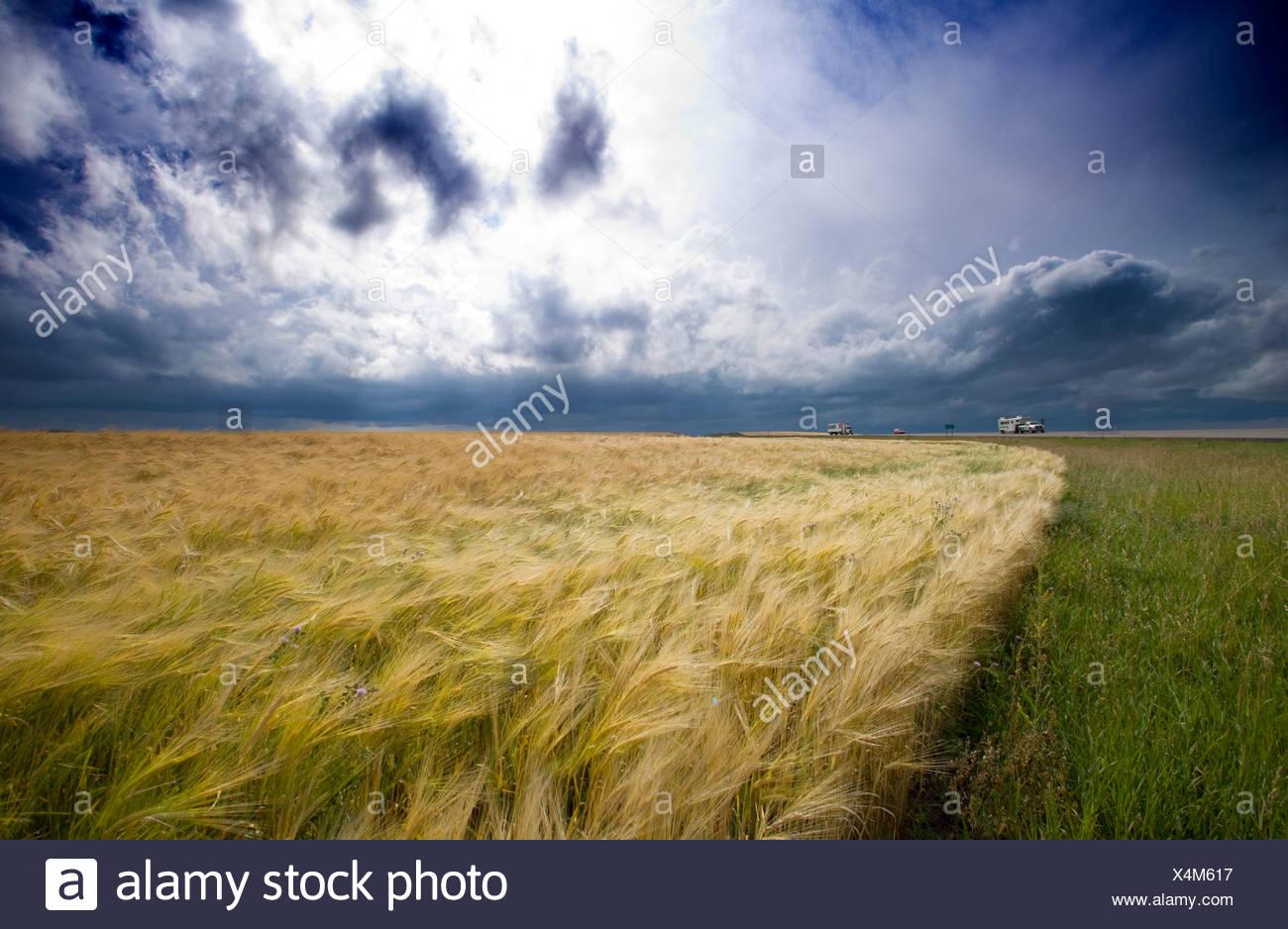 Tormenta moviendo a través de campo de grano, Ridge Road 221, Alberta, Canada, clima, cloud, camión, automóvil, agricultura Imagen De Stock