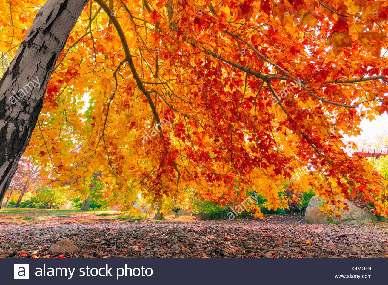 Hojas de otoño colorido Foto de stock