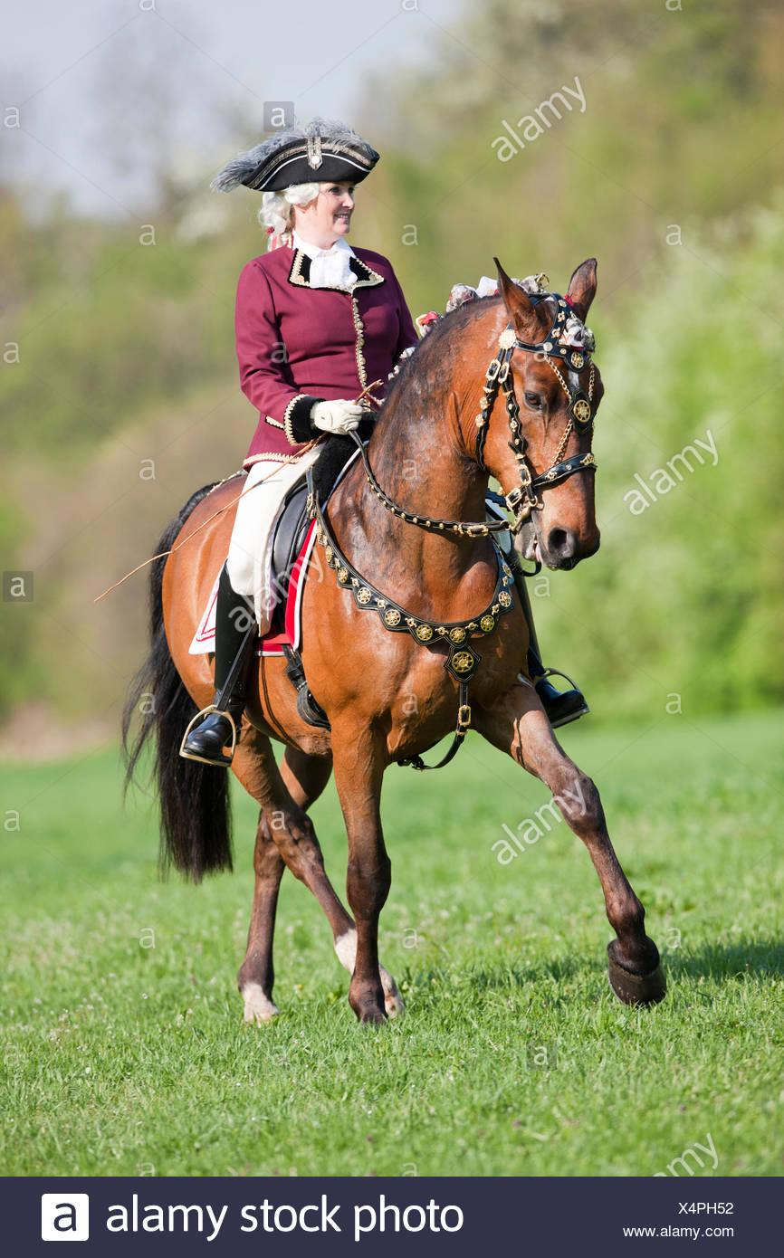 Bay Lipizzan horse Maestoso rider traje barroco mostrando la mitad-pass trote Austria Imagen De Stock