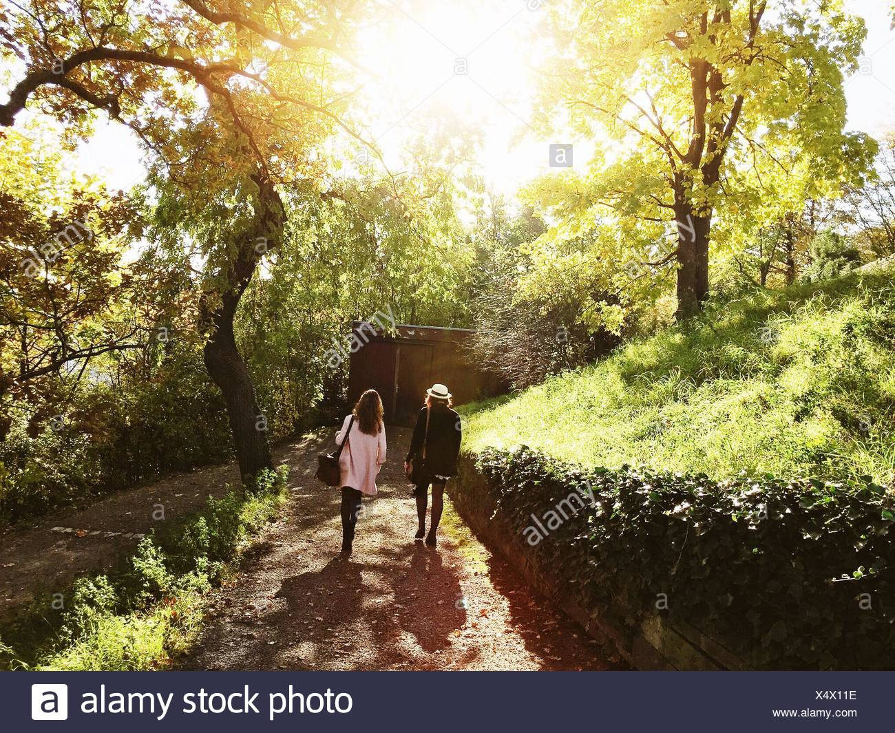 Vista trasera de hembras jóvenes amigos caminando en el sendero en el parque Imagen De Stock