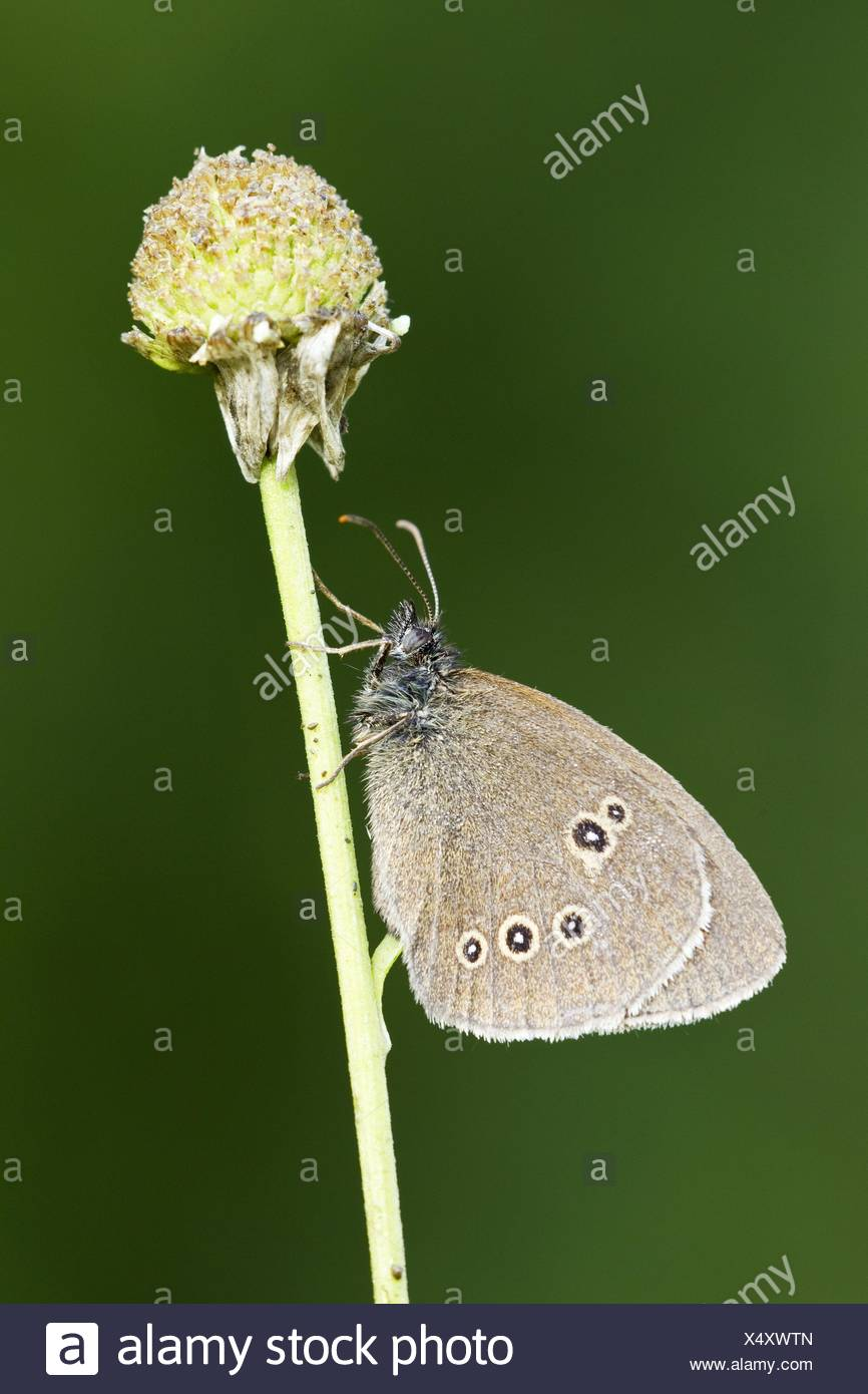 Brush-footed butterfly Foto de stock