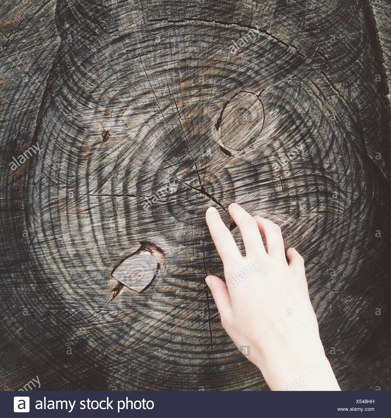 Mano y tronco de árbol Imagen De Stock