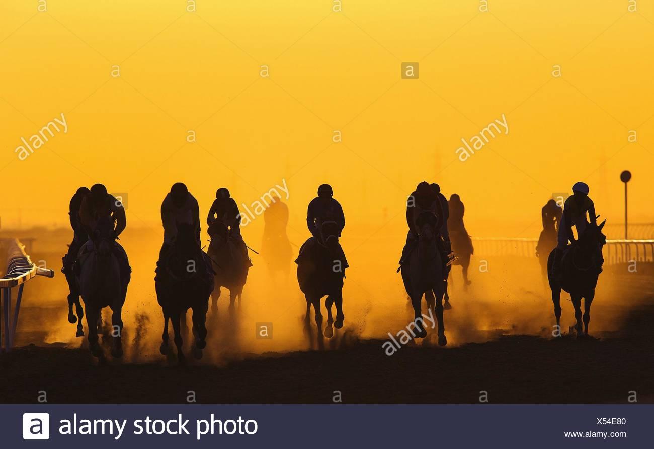 Las carreras de caballos contra el cielo anaranjado claro Imagen De Stock