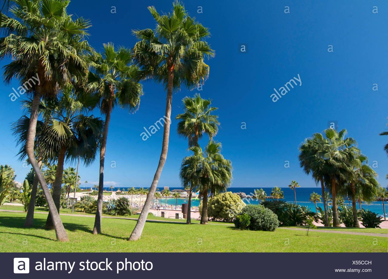 Playa Playa de Amadores en Puerto Rico, Gran Canaria, Islas Canarias, España Imagen De Stock