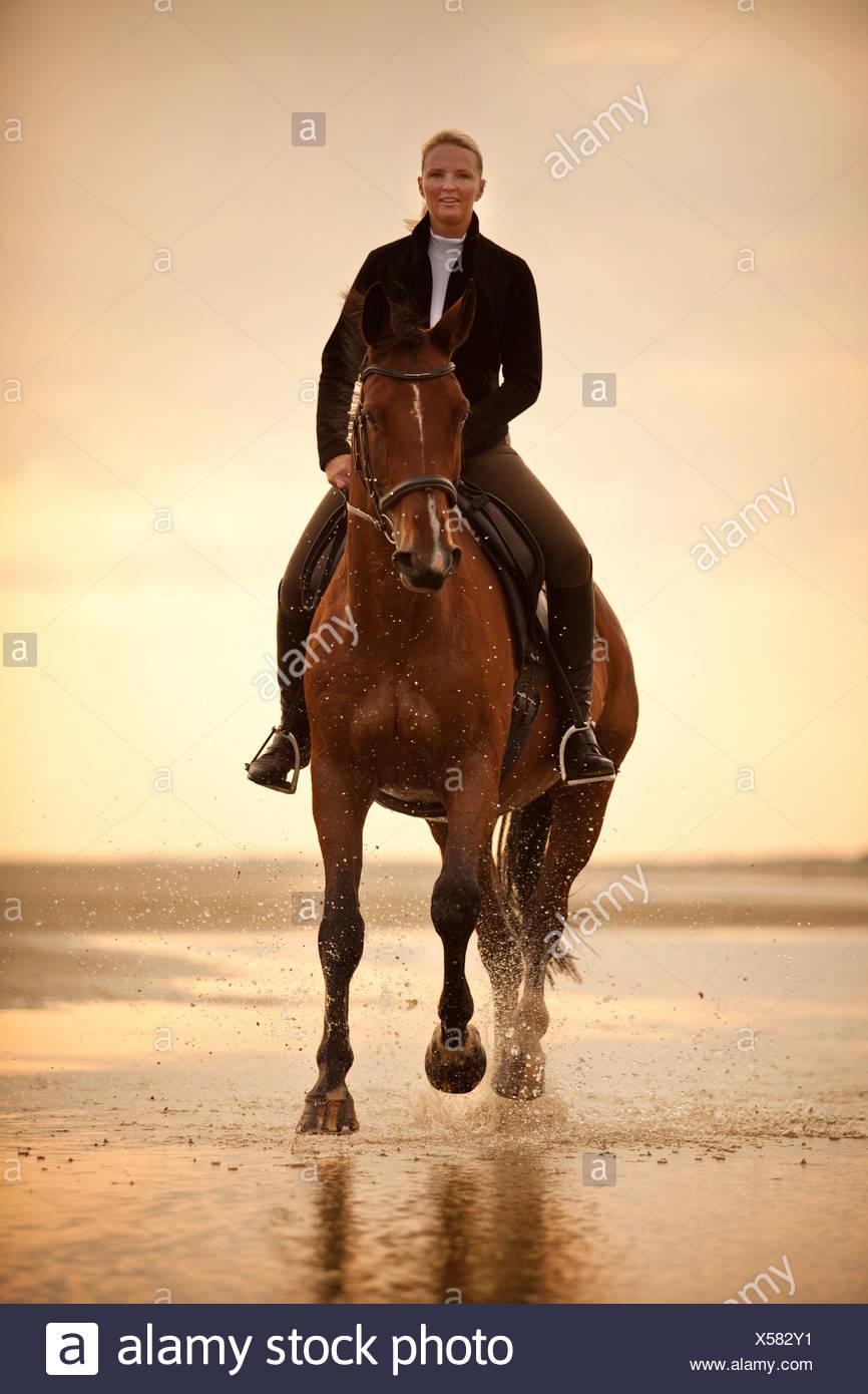 Mujer cabalgando sobre un Hanoverian castrado, vistiendo un cabestro en inglés, en un galope, en la luz de la tarde, en la playa de Borkum Foto de stock