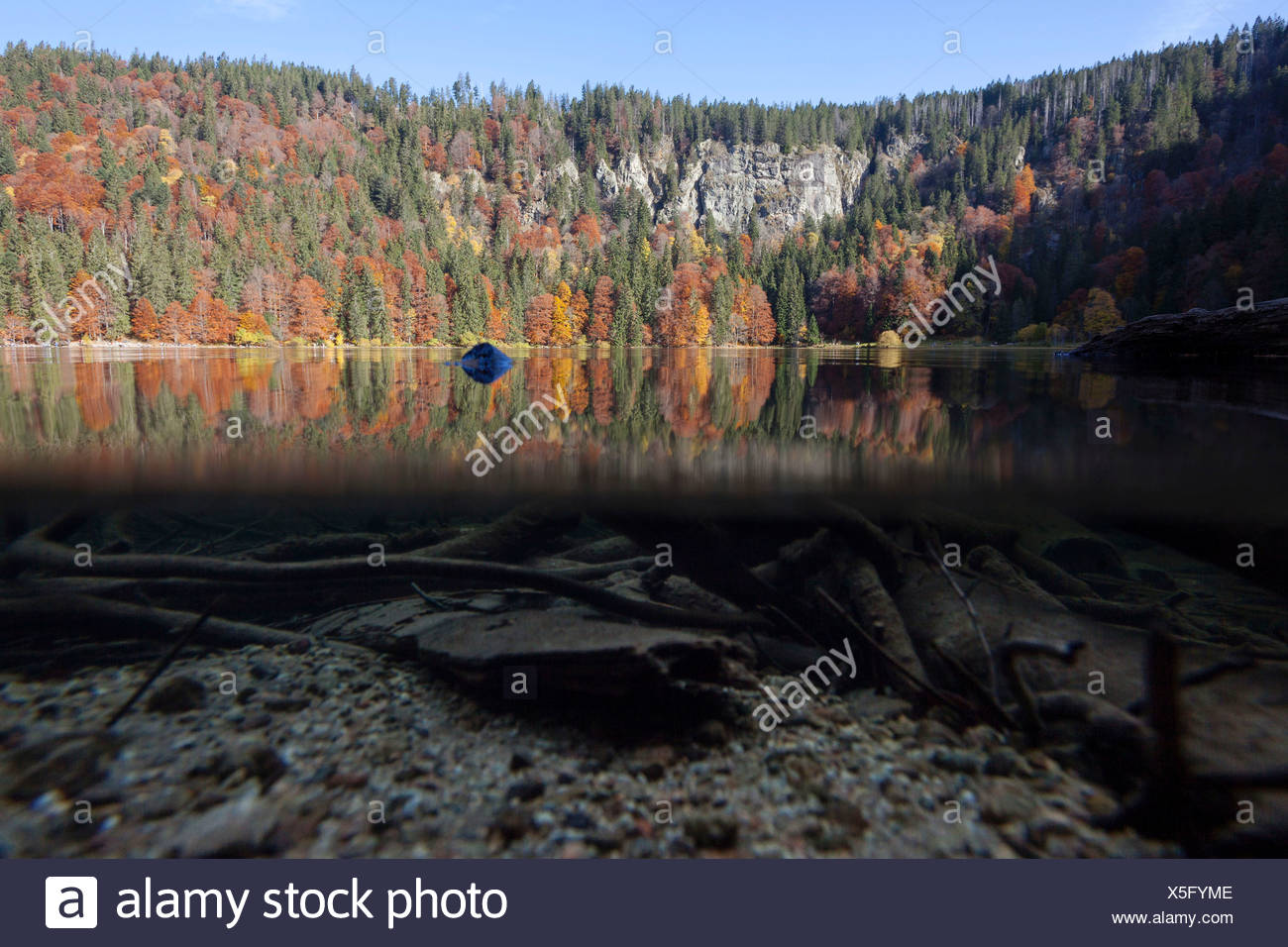 Over-under shot del Lago Feldsee en la Selva Negra, Baden-Wurttemberg Foto de stock