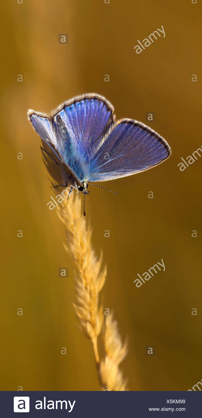 Insectos, mariposas, polillas, insectos, mariposas, oído