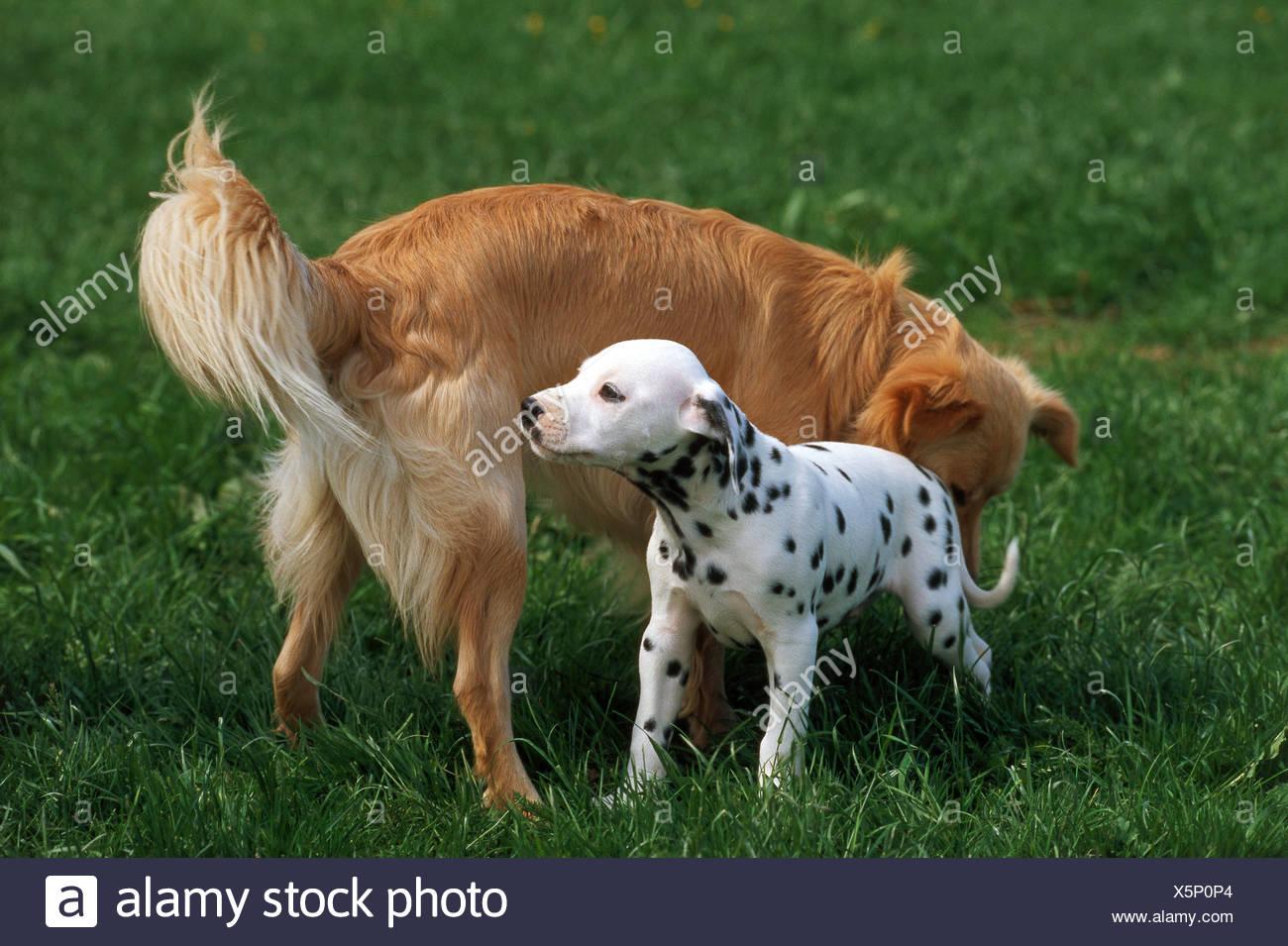 Dalmatian Mongrel Imágenes De Stock & Dalmatian Mongrel Fotos De ...