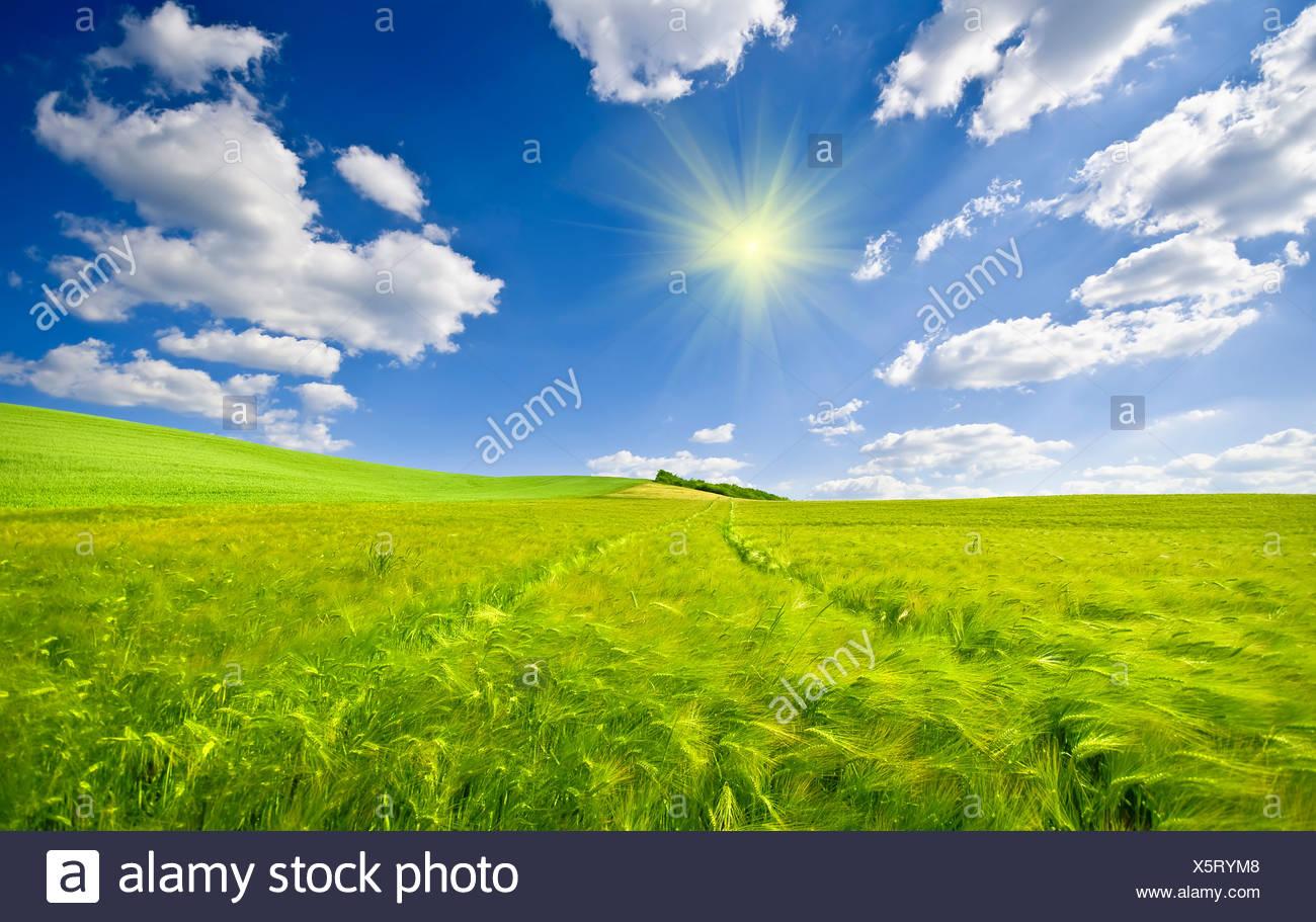 Colores vibrantes y el efecto de la luz solar para este paisaje de interior Imagen De Stock