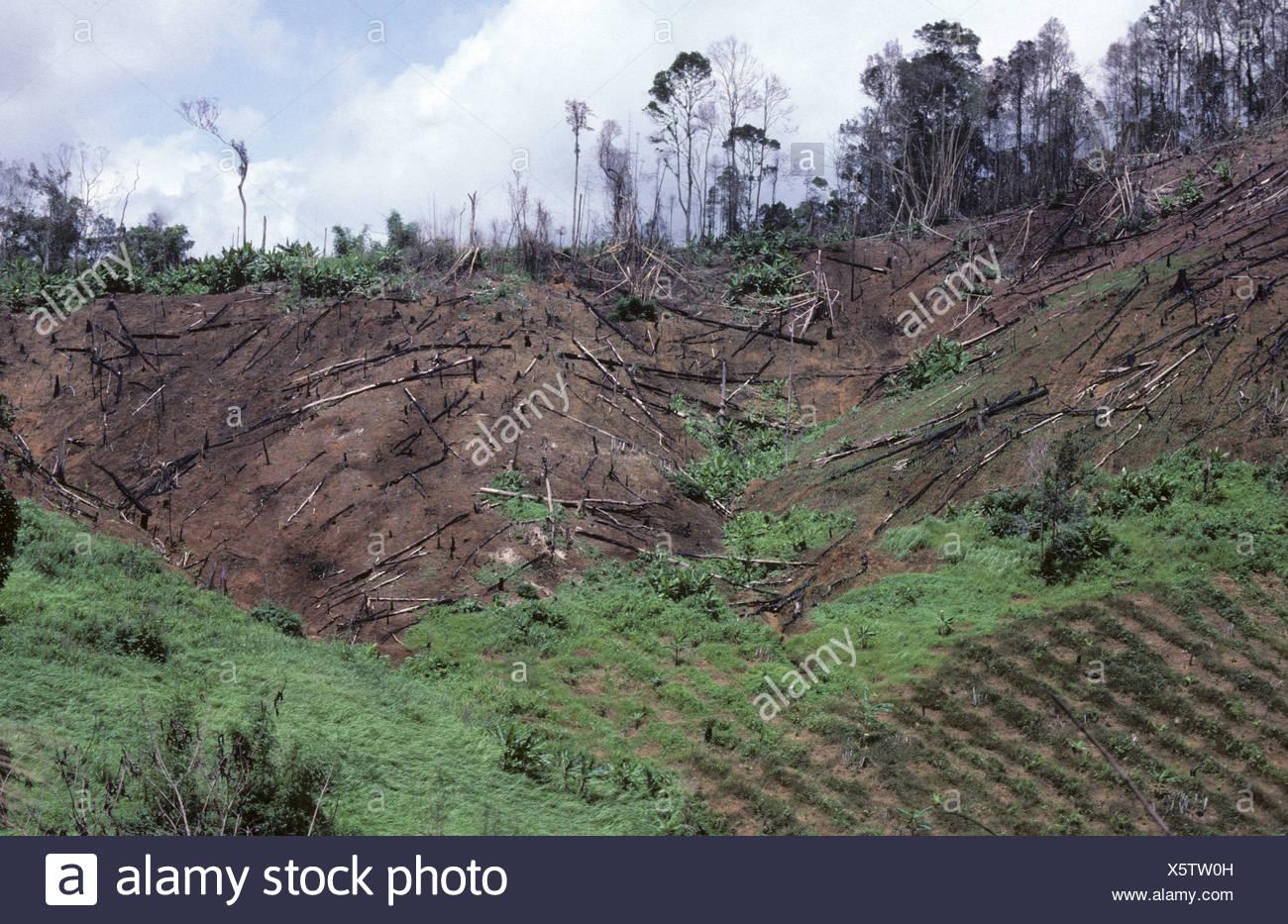 La deforestación de los bosques de tala y quema en Tailandia mostrando el recorte en las laderas bajas Imagen De Stock