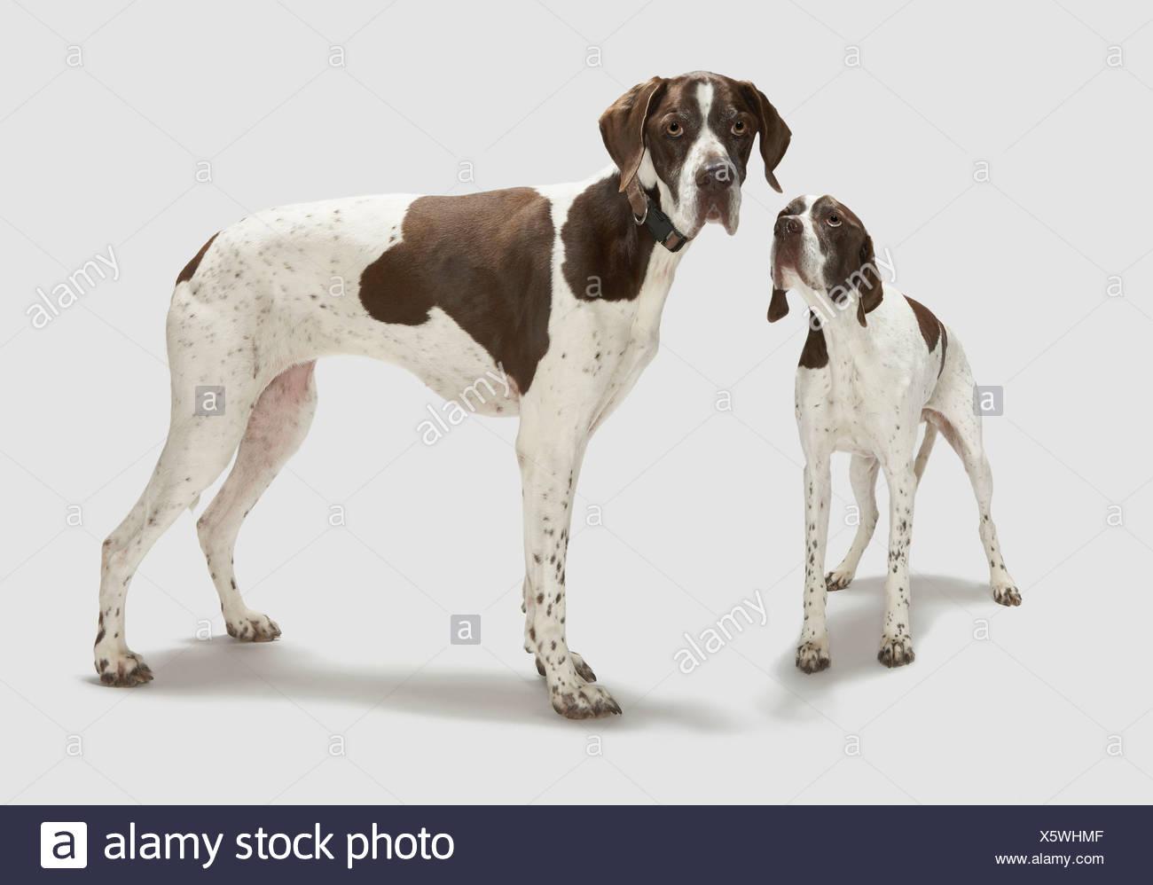 Retrato de dos perros. Foto de stock