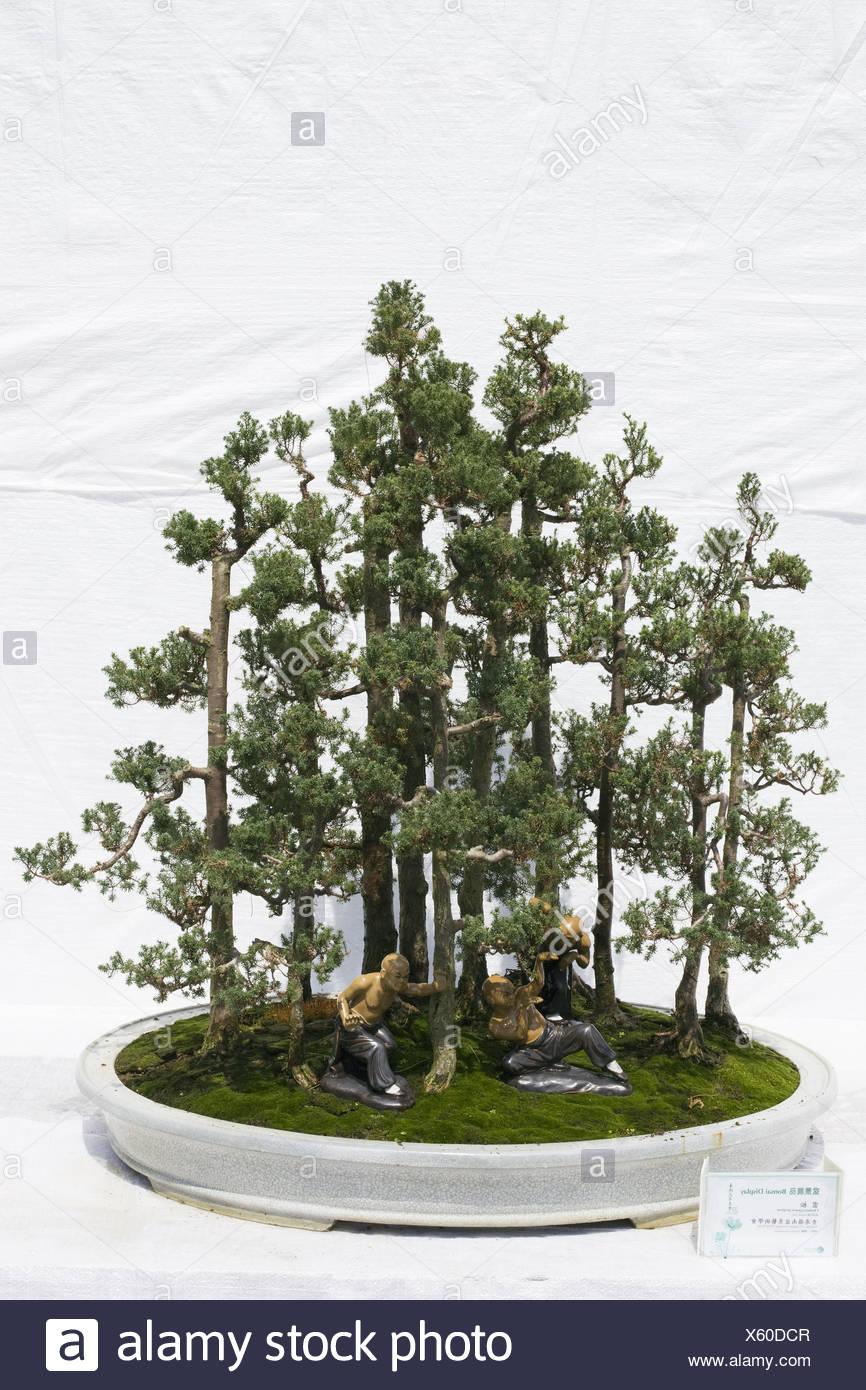 Bonsai garden im genes de stock bonsai garden fotos de for Jardines chinos pequenos