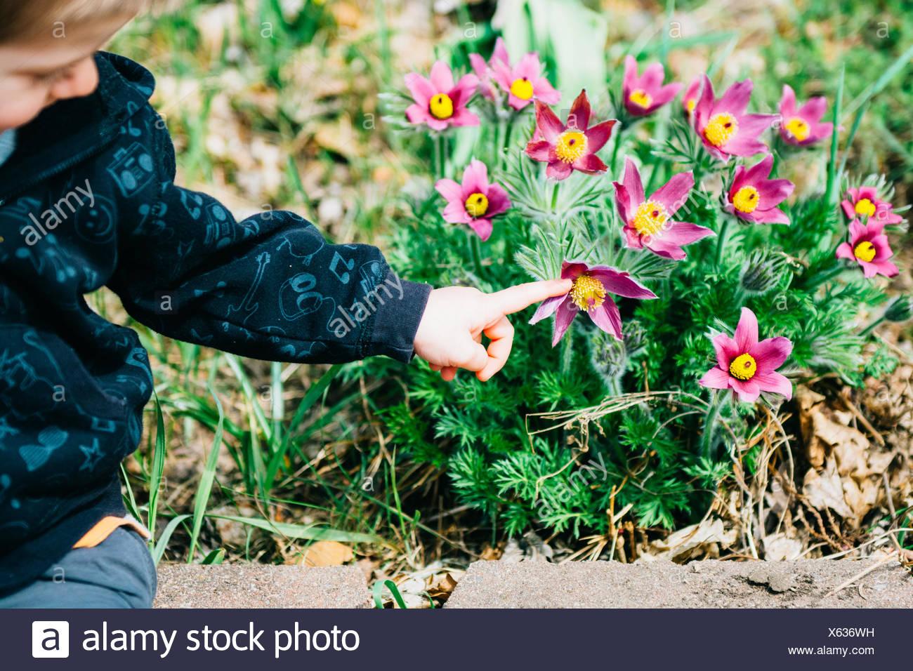 Chico apuntando a flores Foto de stock