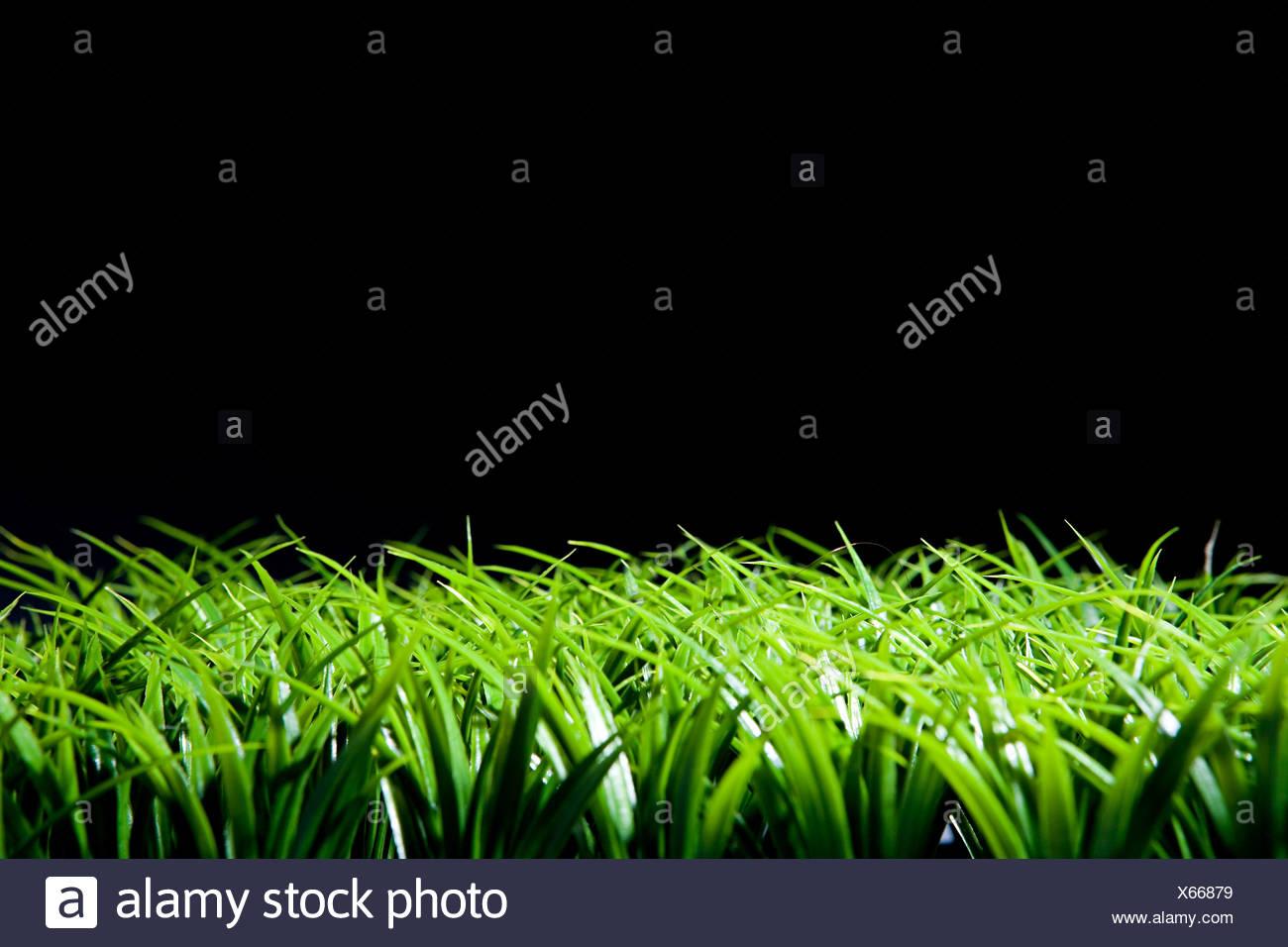 Hierba y fondo negro Imagen De Stock