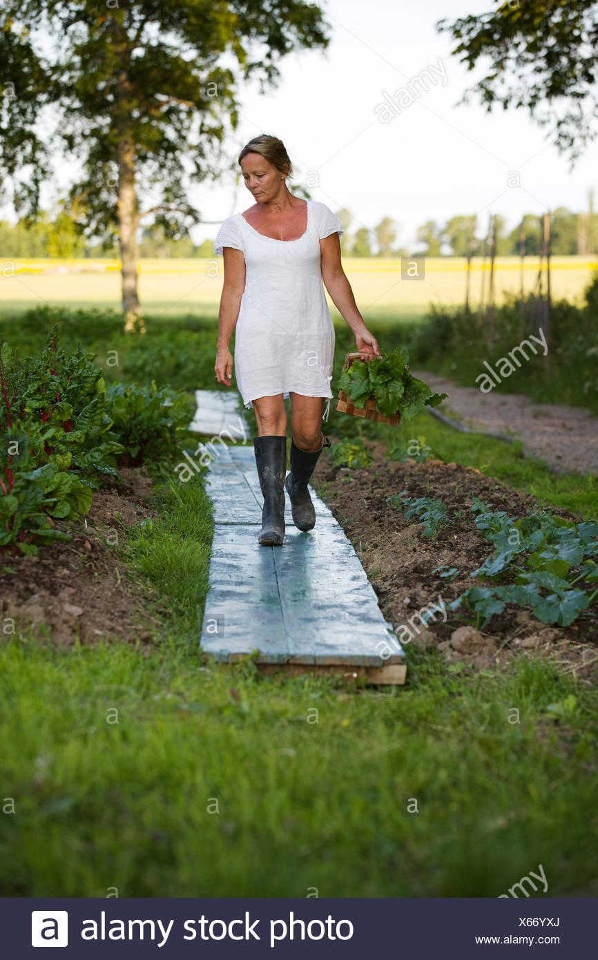 Suecia, Ostergotland, mujer madura, cosechando vegetales Imagen De Stock