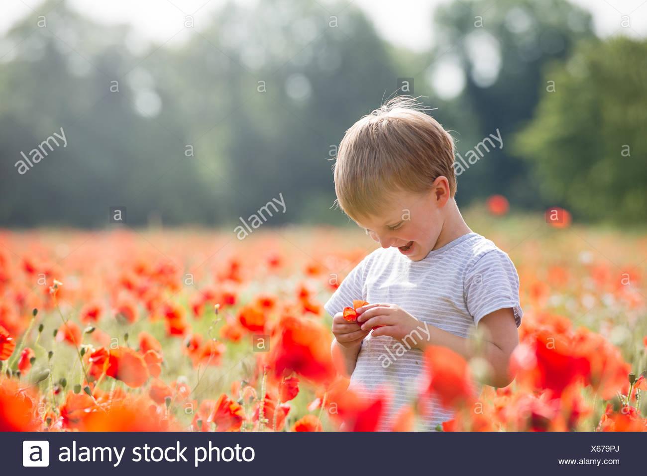 Sonriente Muchacho de pie en un campo de amapolas Imagen De Stock