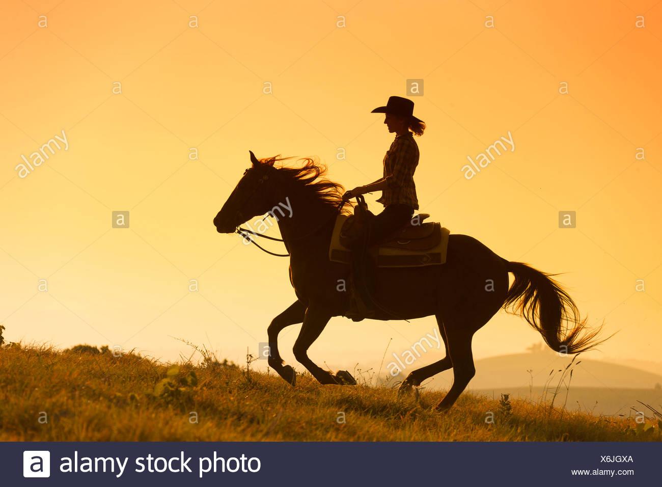 American Quarter Horse Rider castrado Castaño al galope, siluetas contra el cielo nocturno, Toscana, Italia Imagen De Stock