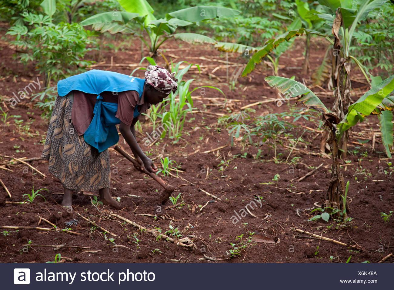 Mujer de agricultura está trabajando en su campo con un hacha, en Jinja, Uganda Imagen De Stock