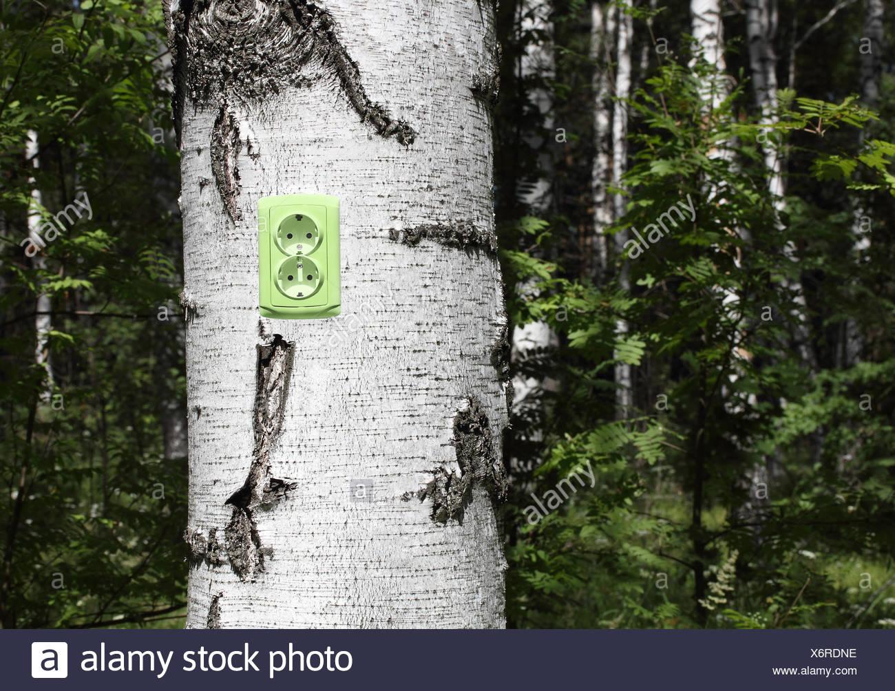 Receptáculo de alimentación en un árbol Foto de stock