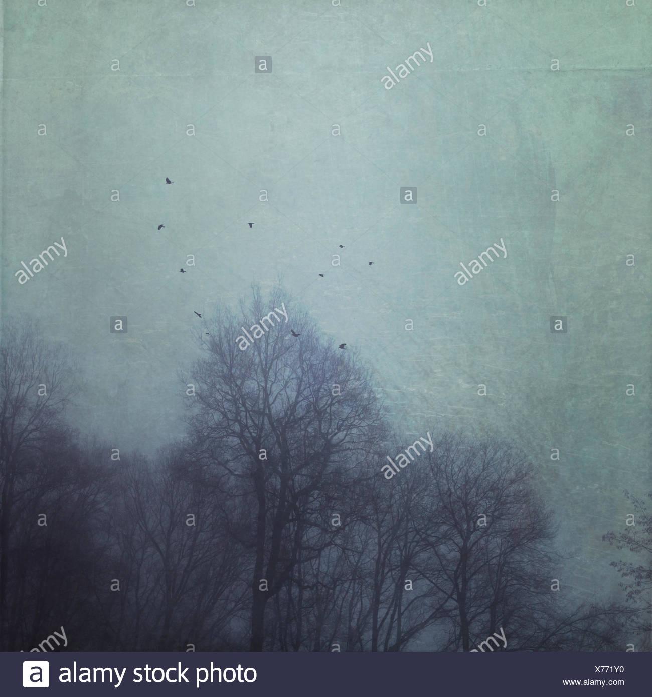 Las siluetas de los árboles durante la niebla con las aves voladoras, efecto texturado Imagen De Stock