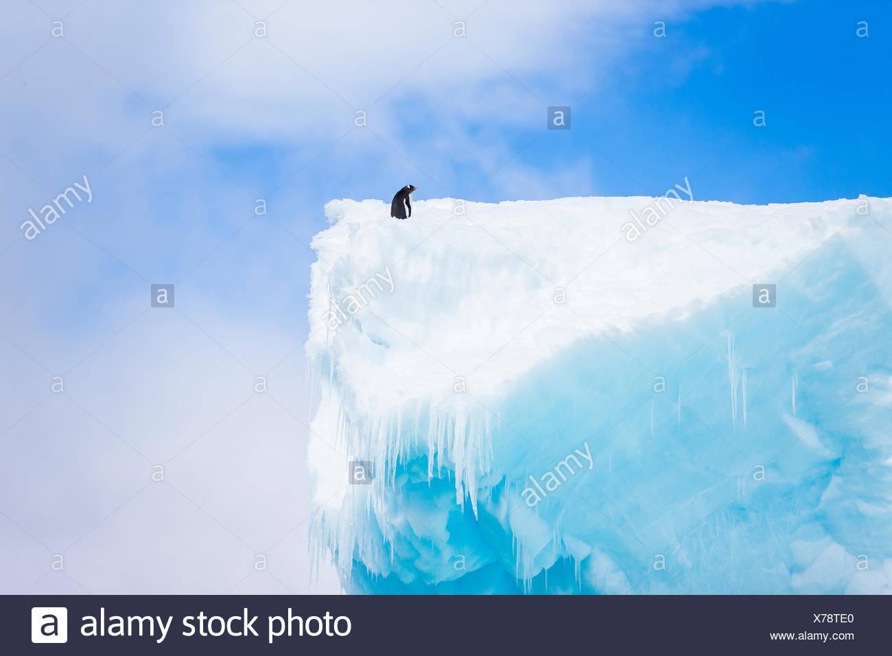 Un pingüino se asienta en la cima de un alto témpano de hielo en la Antártida. Imagen De Stock