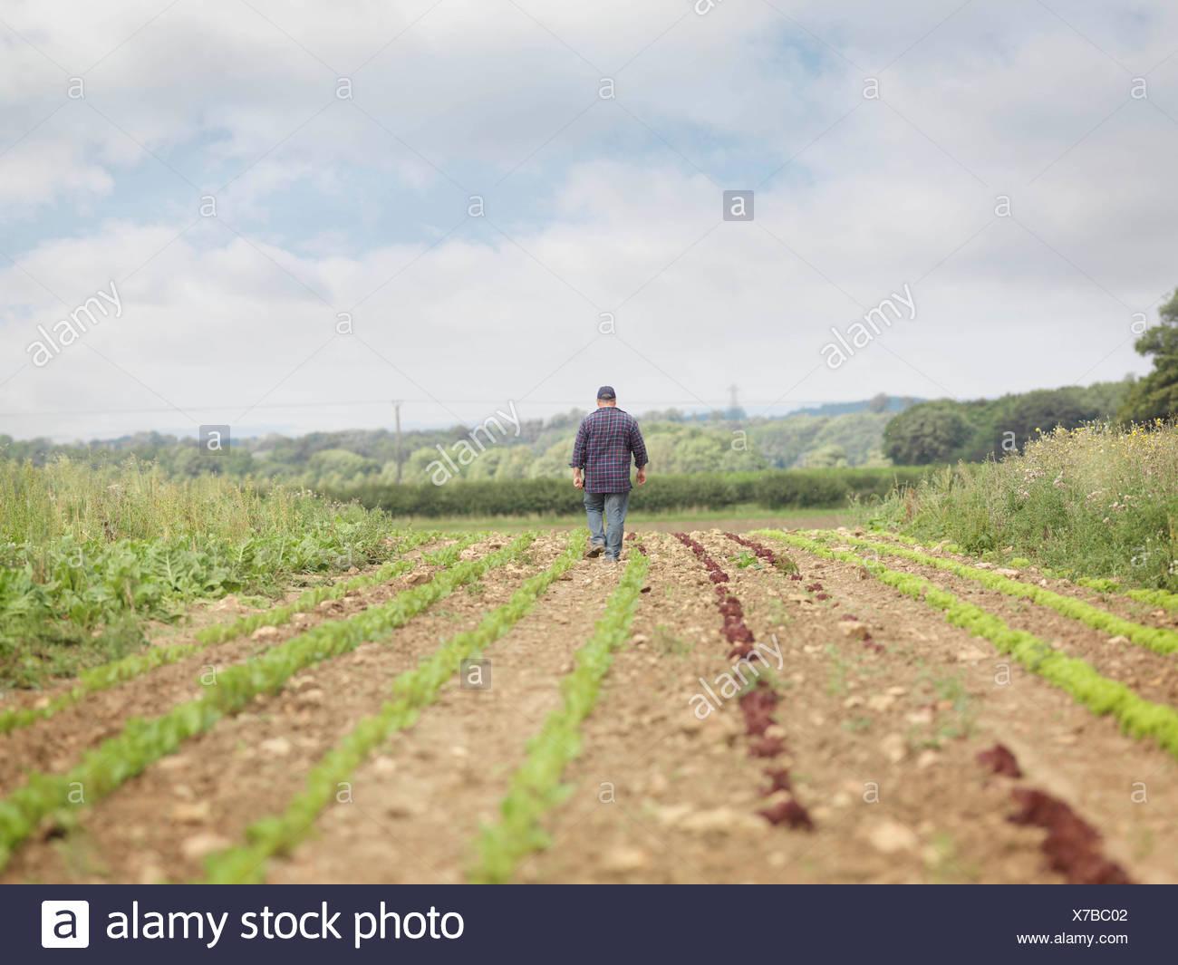 Granjero caminando en campo de cultivo Vista posterior Imagen De Stock
