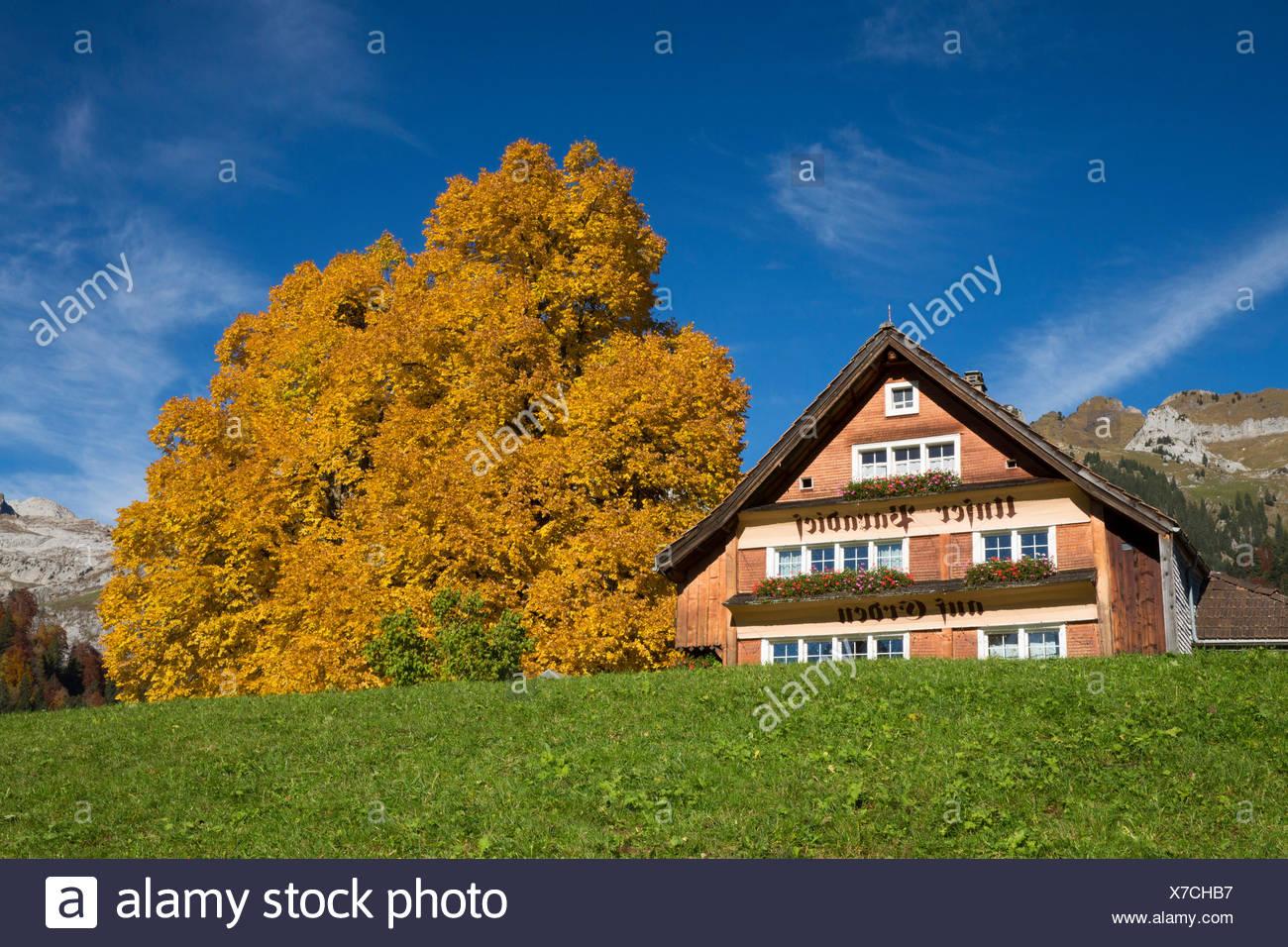 Toggenburg, Unterwasser, SG Alpstein, Säntis, montaña, montañas, otoño, SG, en el cantón de San Gallen, Toggenburg, Alpstein, Säntis, Foto de stock