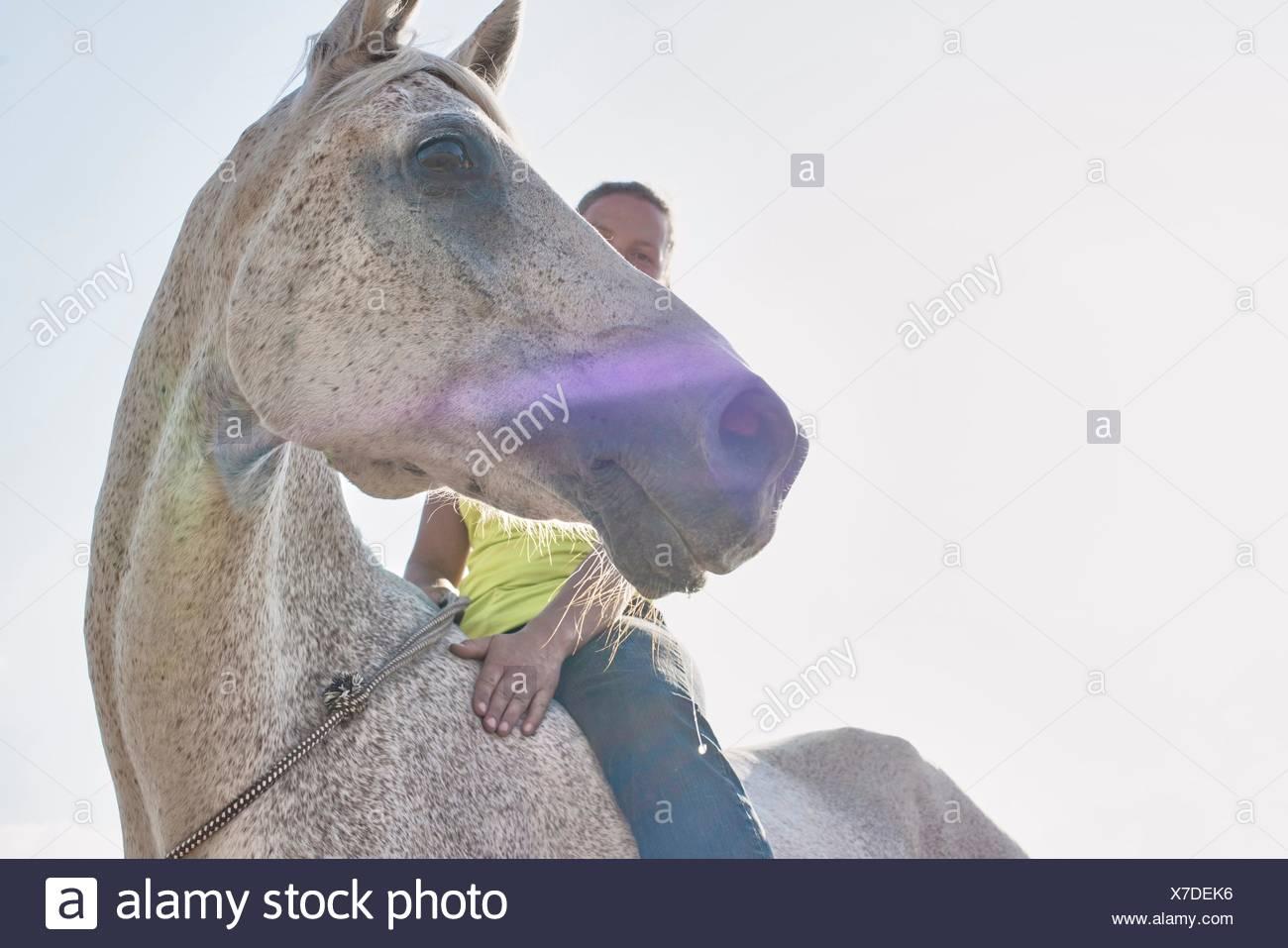 Ángulo de visión baja de la mujer que monta a caballo gris bareback Imagen De Stock
