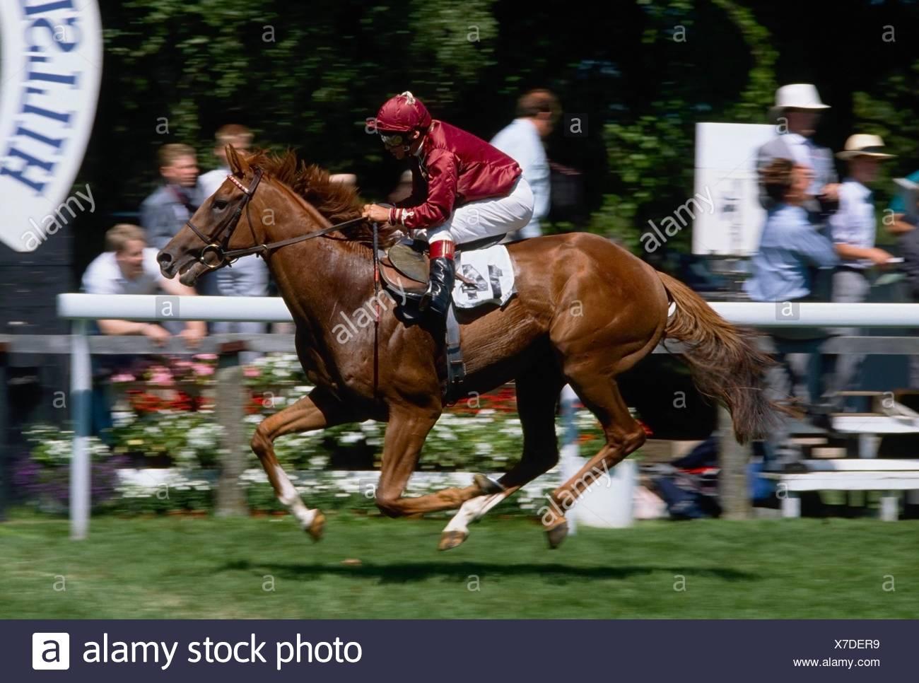 El Hipódromo de Newmarket, Suffolk, Inglaterra; Carreras de Caballos Imagen De Stock