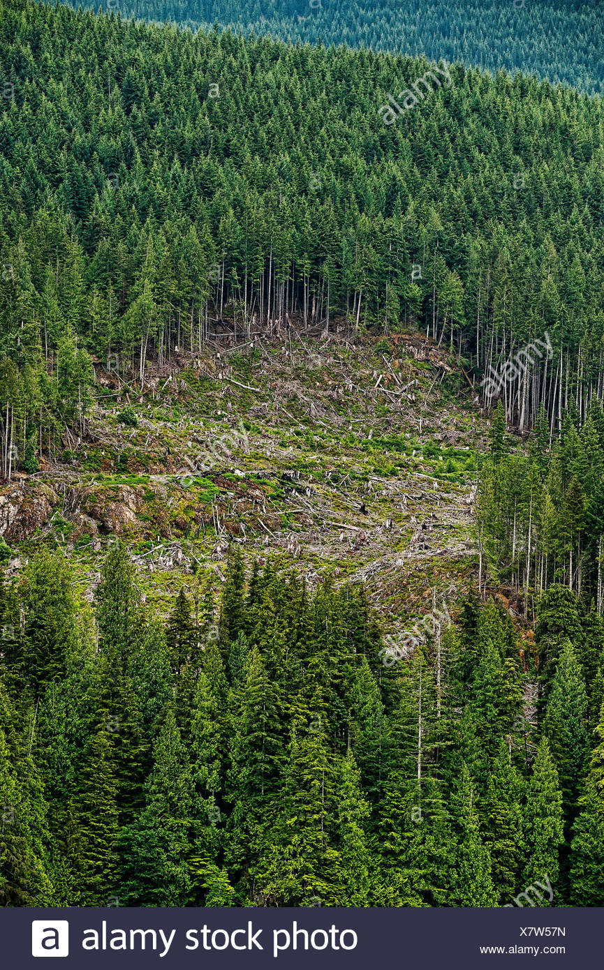 A lo largo del río Clearcutting Campell, British Colombia, Canadá Imagen De Stock