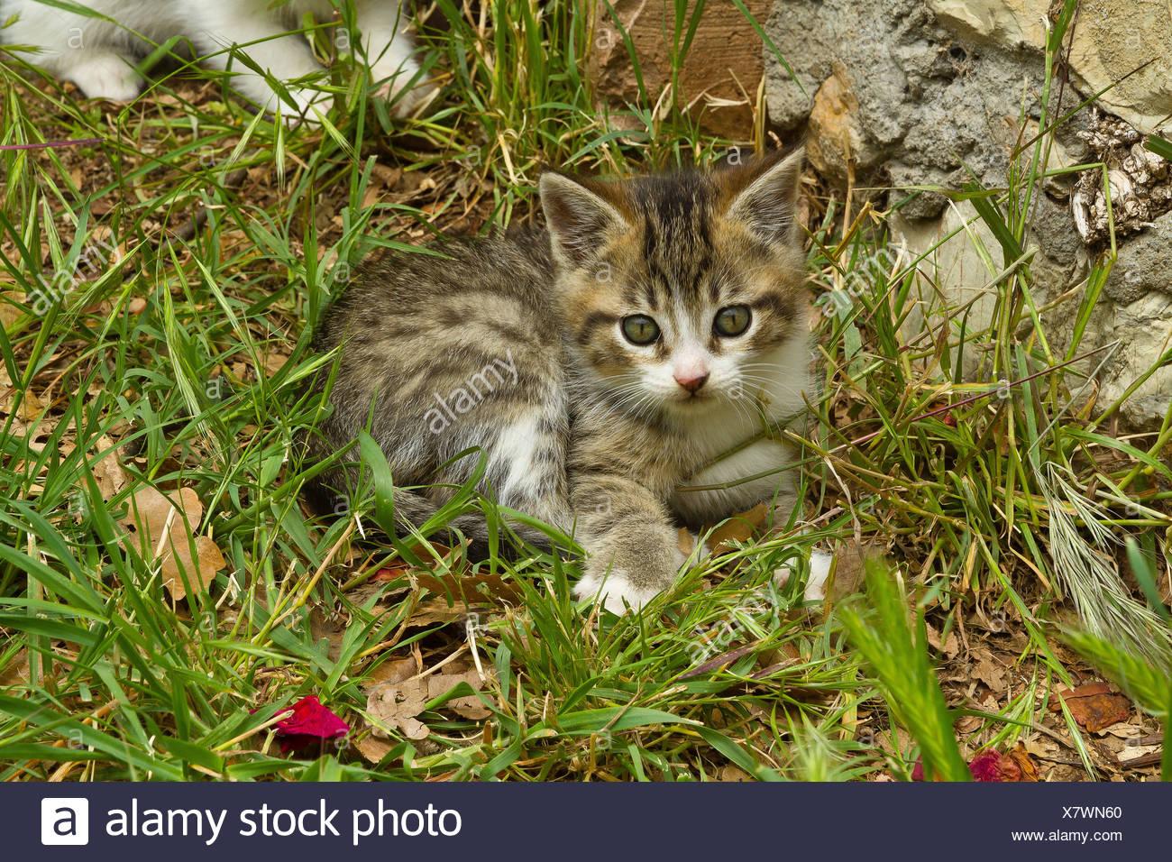 Animal, gato, kitten, jóvenes, jardín, animales domésticos, mascotas, pradera Imagen De Stock