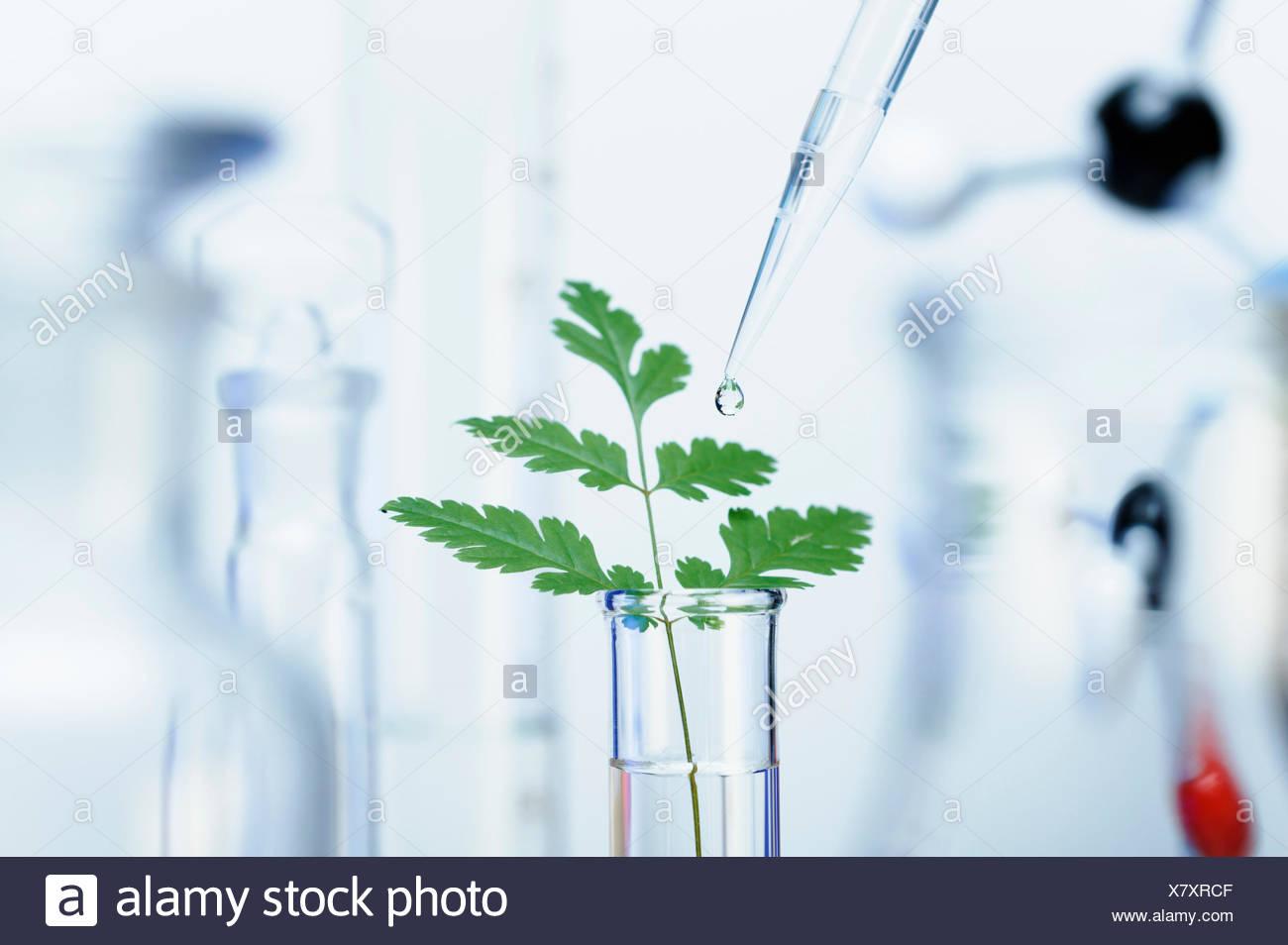 La investigación biotecnológica precision micropipeta Imagen De Stock