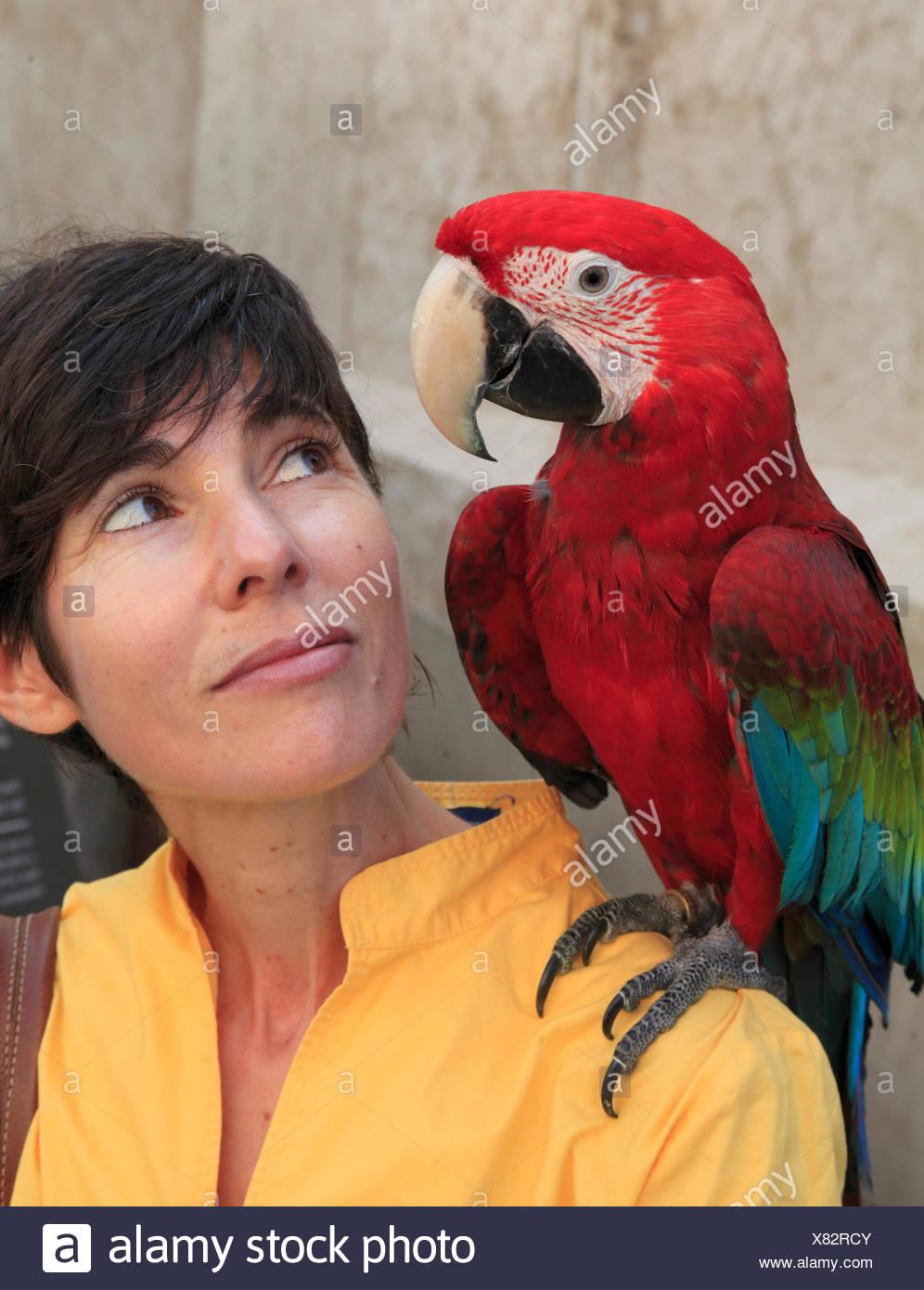 Qatar, Doha, souq waqif, el mercado de pájaros, mujer con un loro, Foto de stock