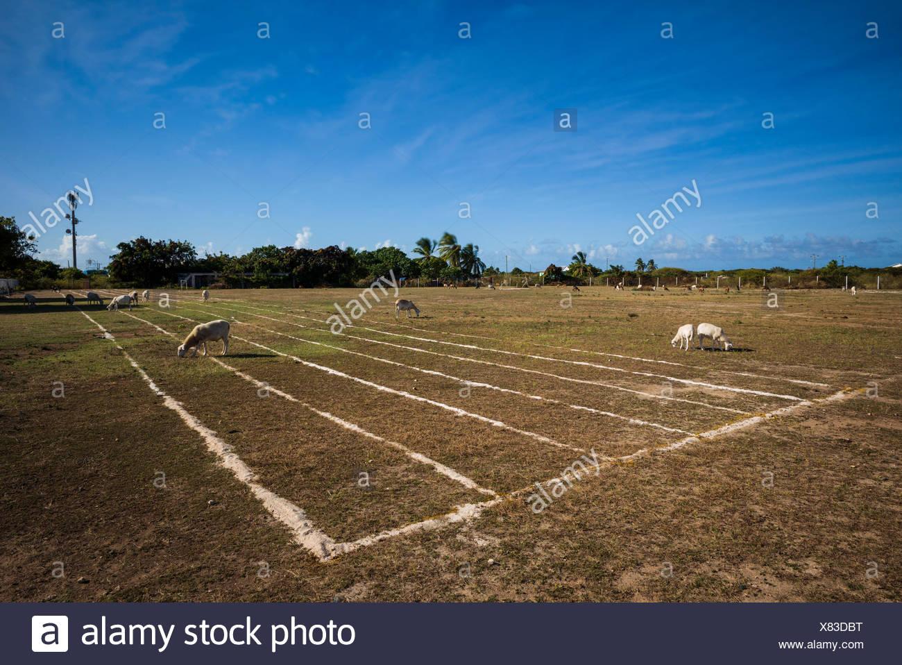 Islas Vírgenes británicas, anegada, el asentamiento, campo de deportes Imagen De Stock