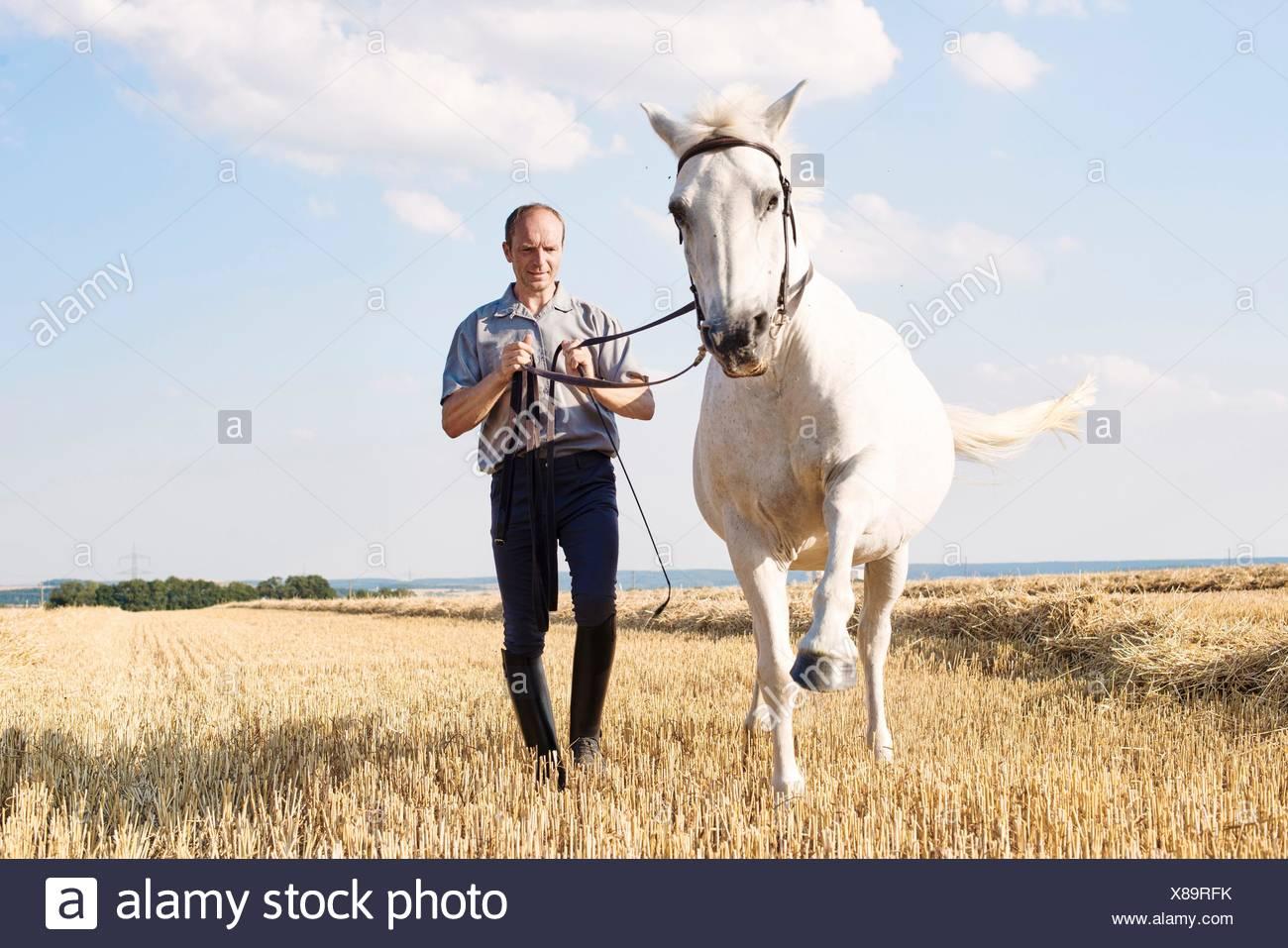 Hombre de trote formación white horse en el campo Imagen De Stock