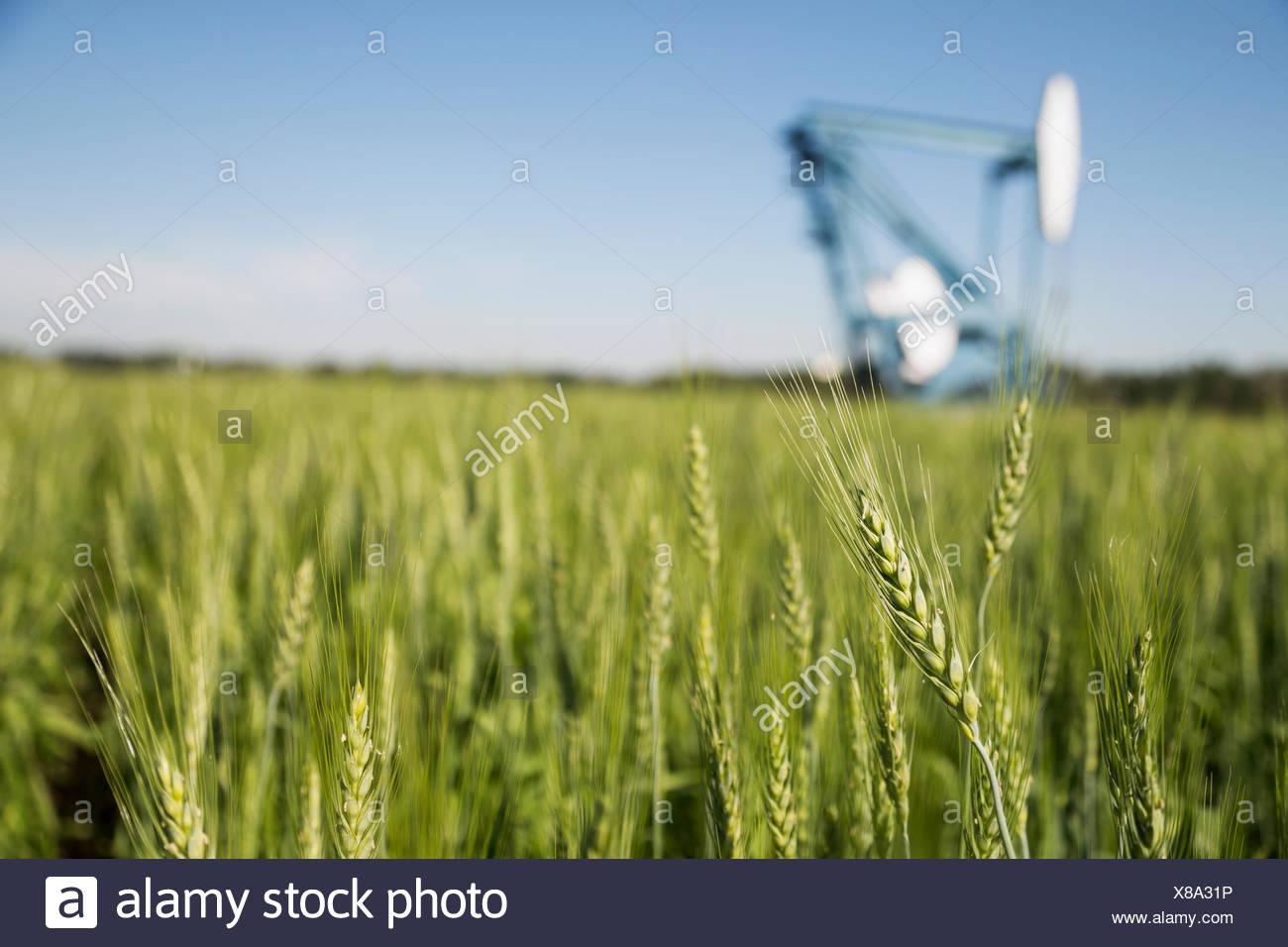 Pozo de petróleo en el fondo del campo de trigo verde Imagen De Stock