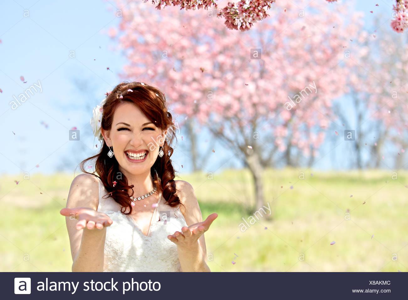 Novia es derramados en Los Cerezos en flor Imagen De Stock