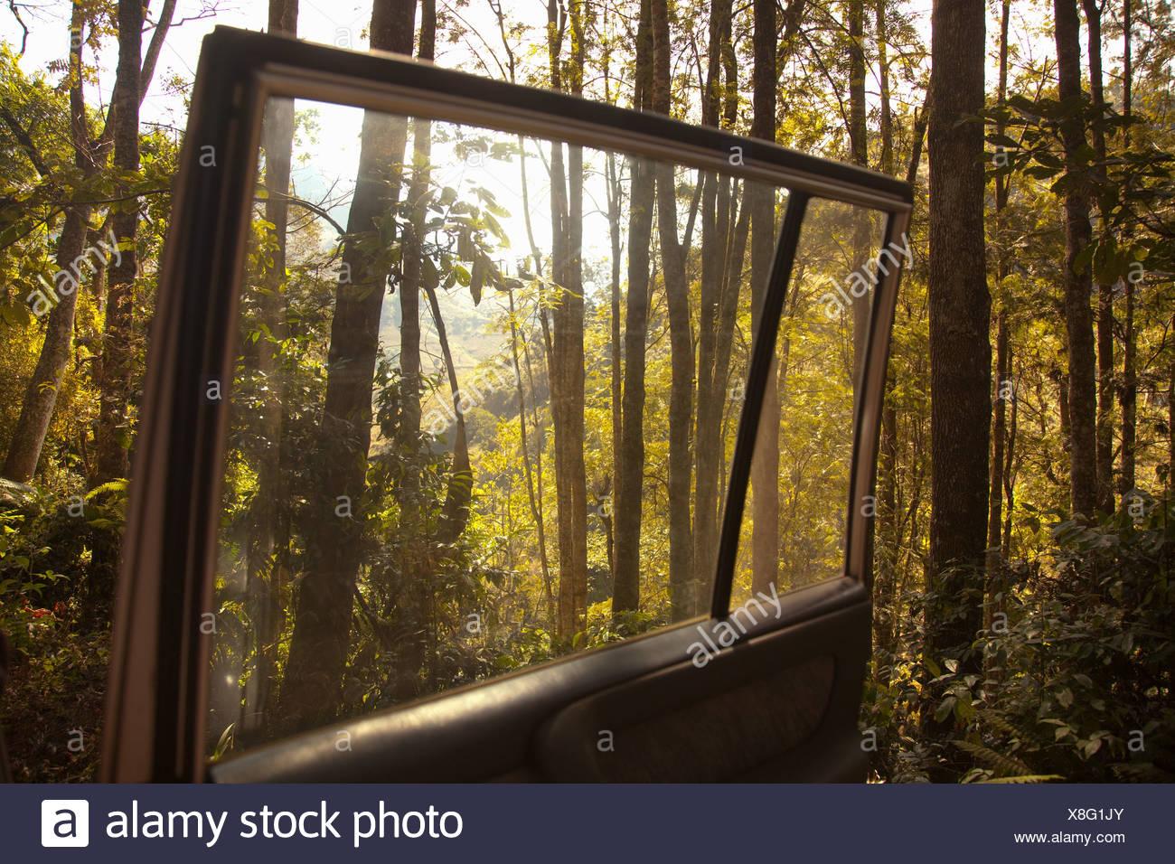 Bosque visto desde abrir puertas de coches Imagen De Stock